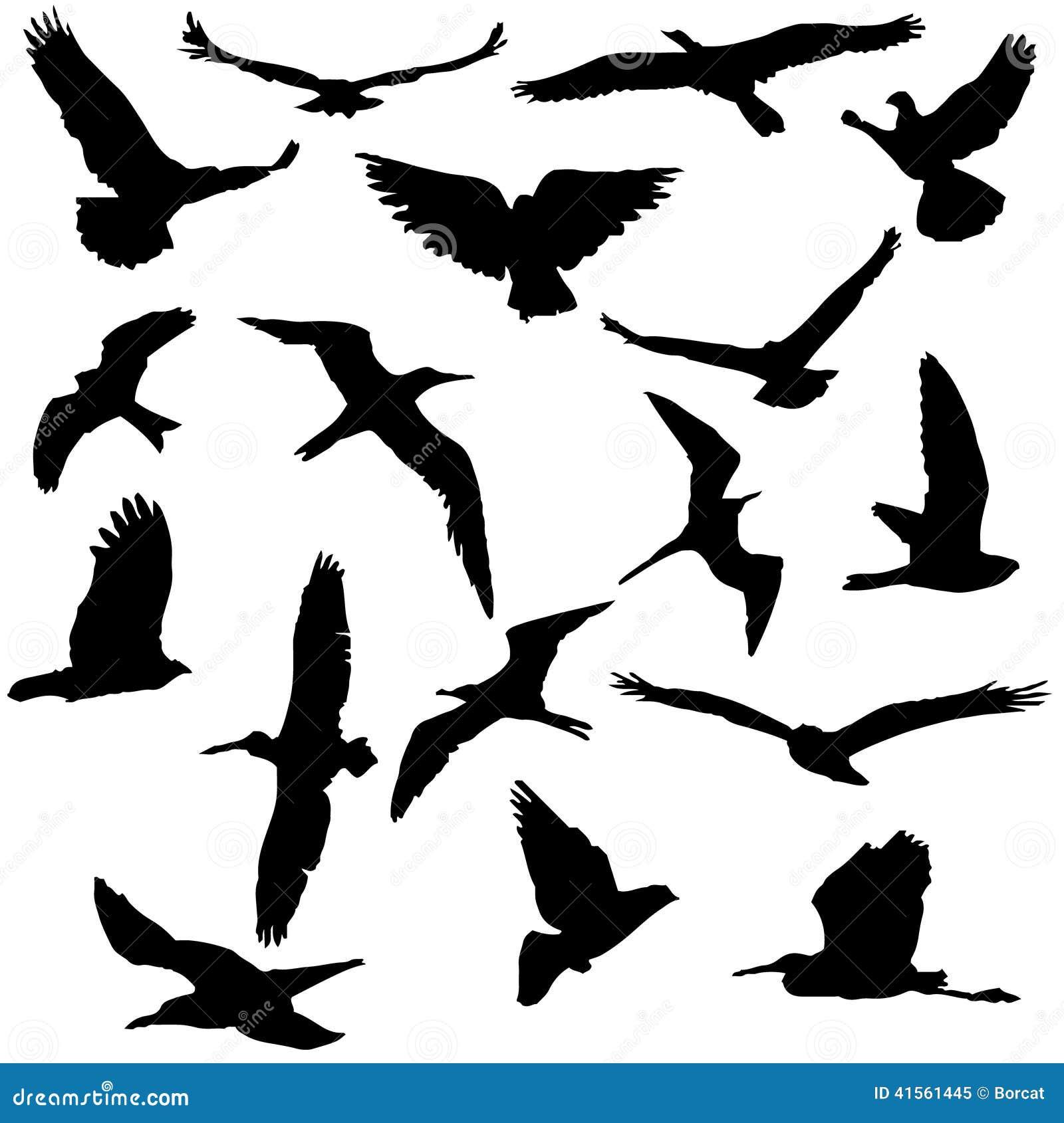 鸟剪影的传染媒介汇集