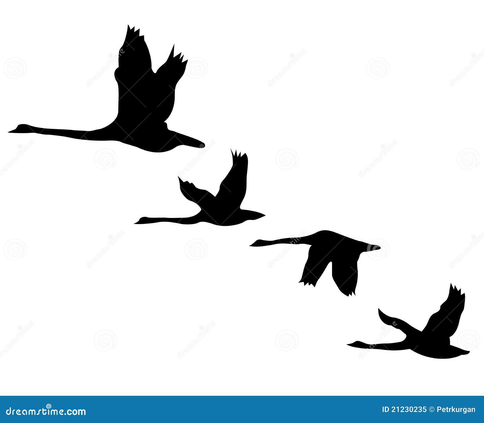 空白背景鸟黑色的剪影.