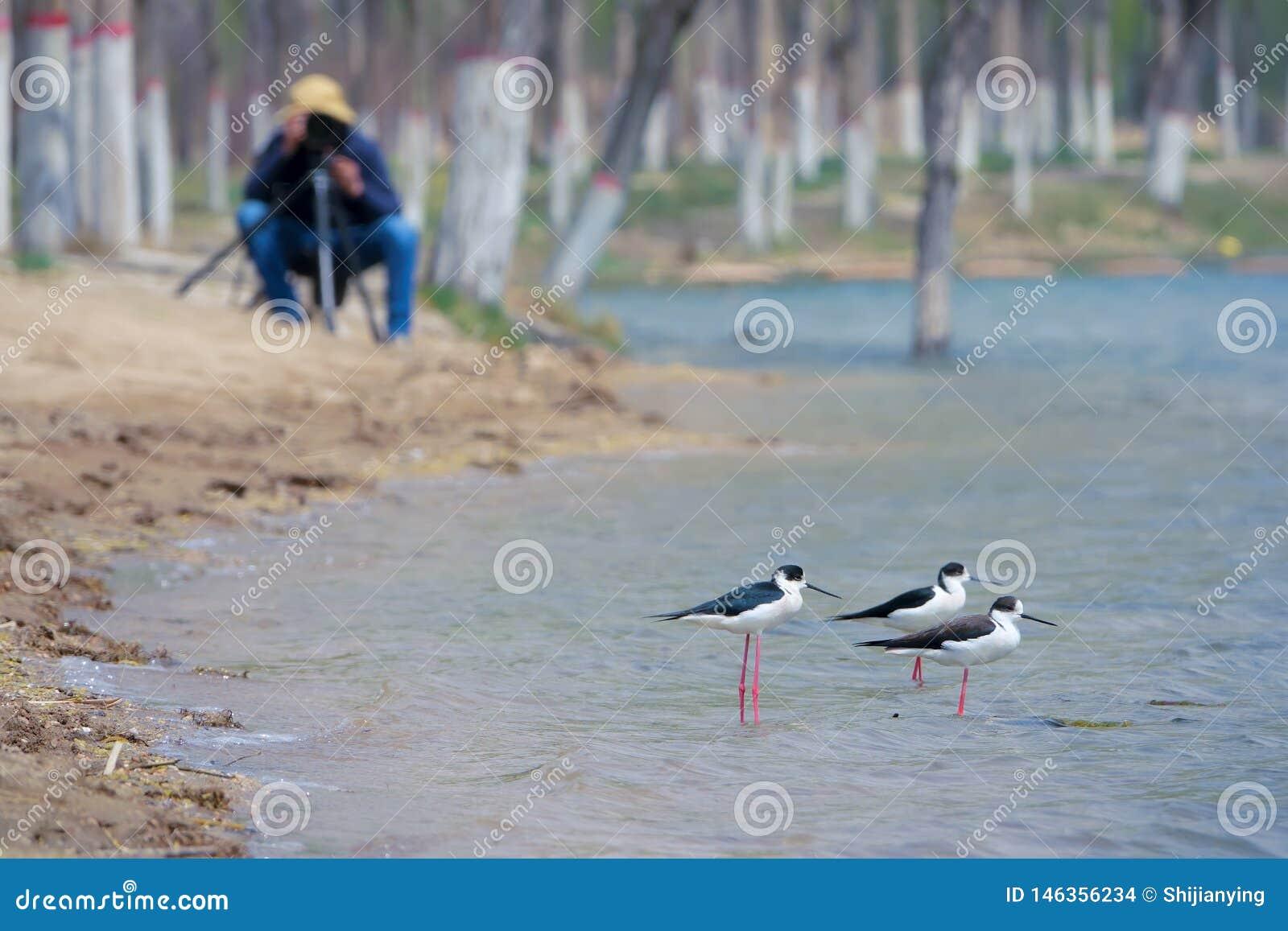 鸟和摄影师