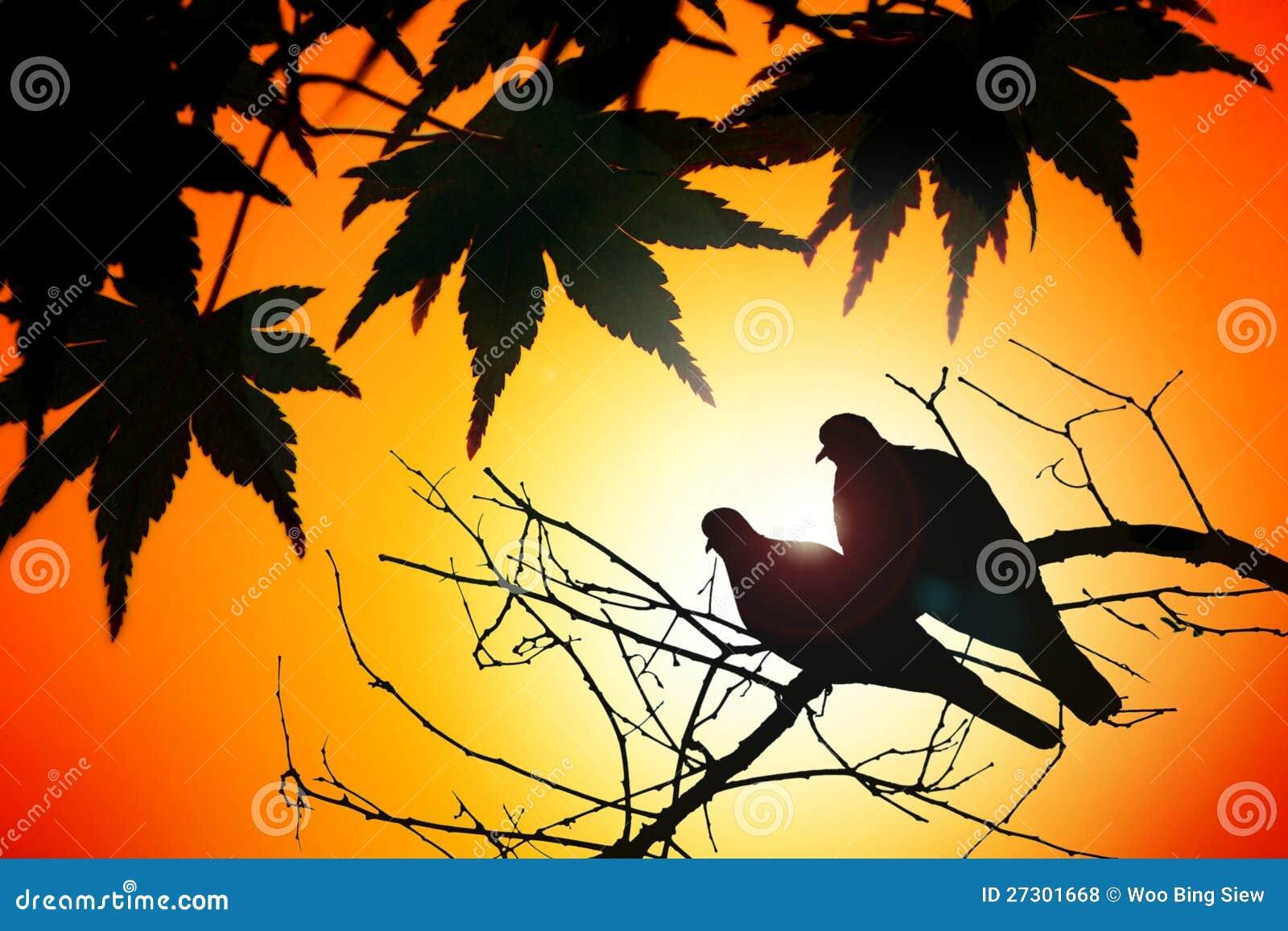 鸟夫妇在秋天