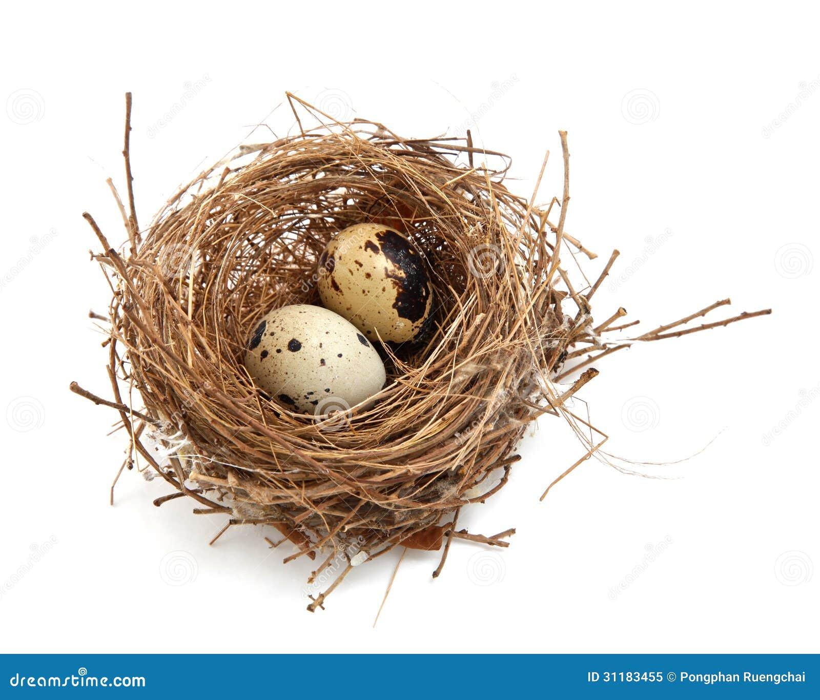 鸟巢和鸡蛋