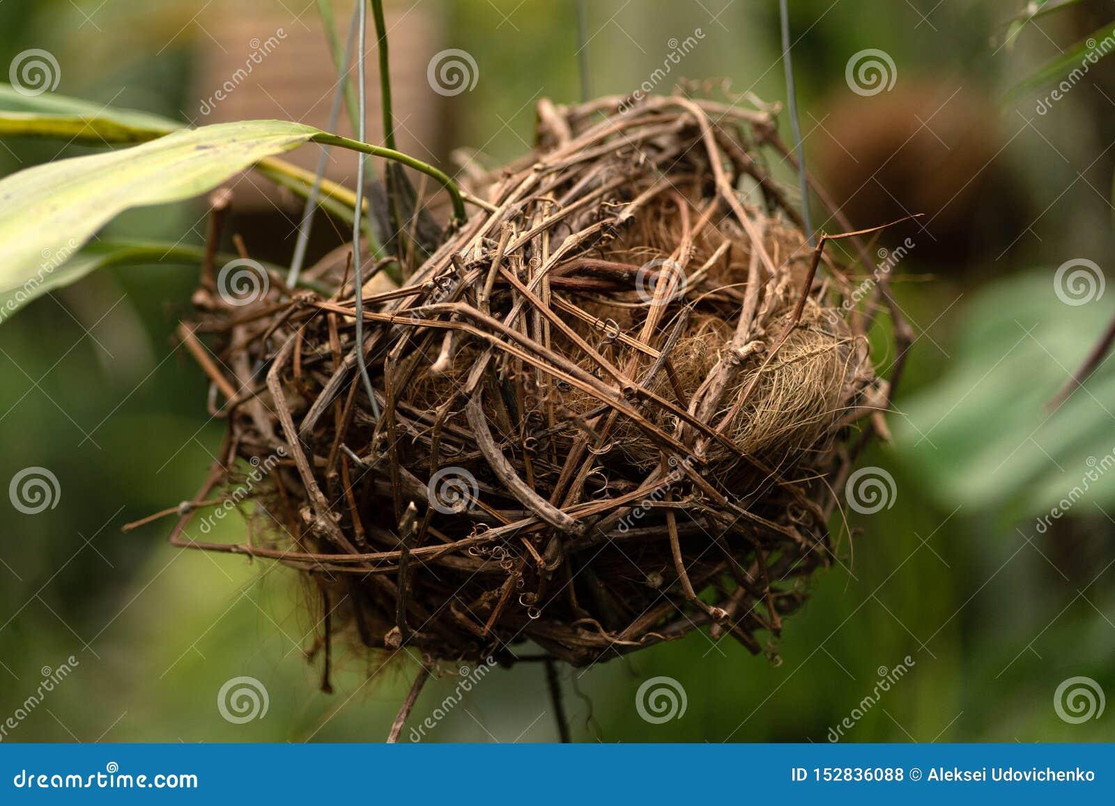 鸟巢构成在植物背景中