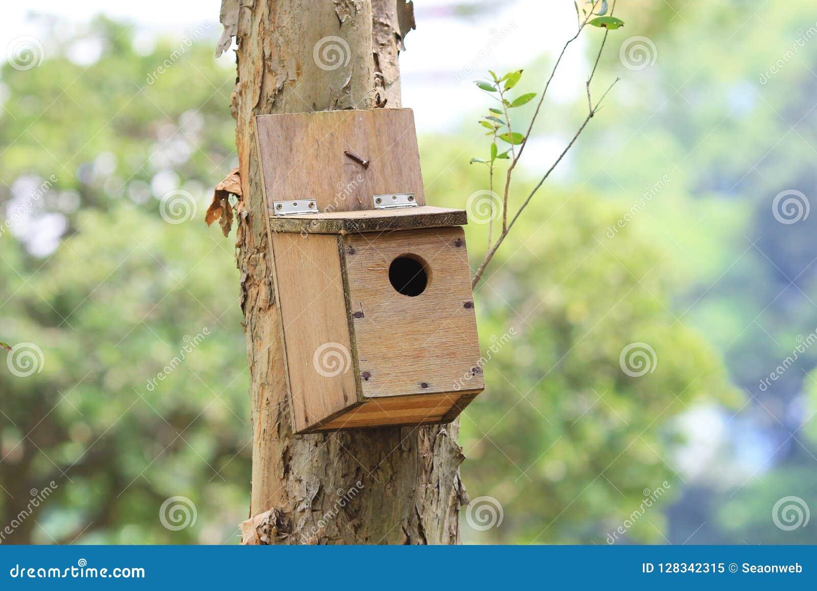 鸟房子室外在树的森林里