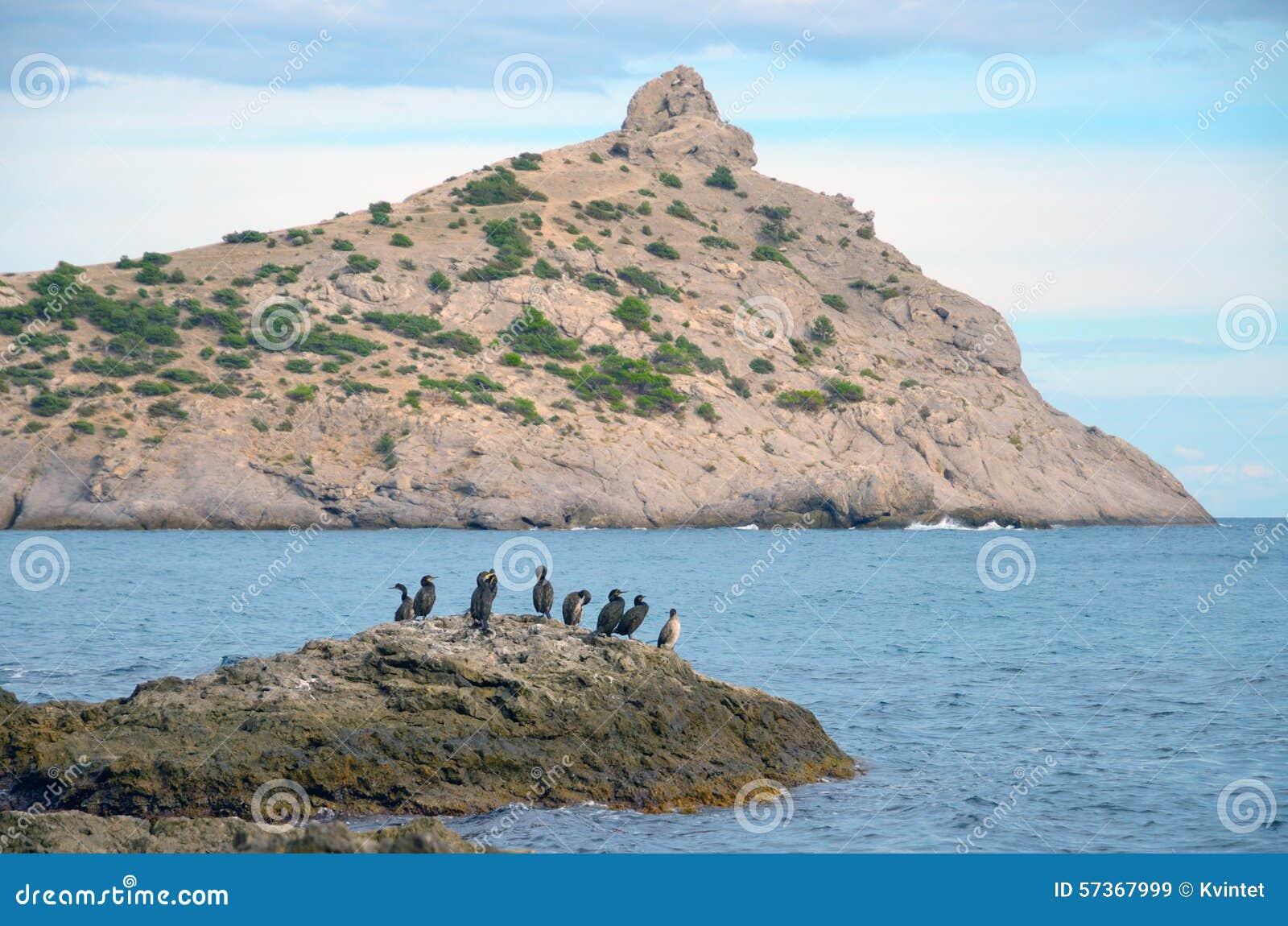 海�:#k�.&_鸟群在一块大石头的反对海 反对天空的海角kapchyk 在蓝天的云彩 一