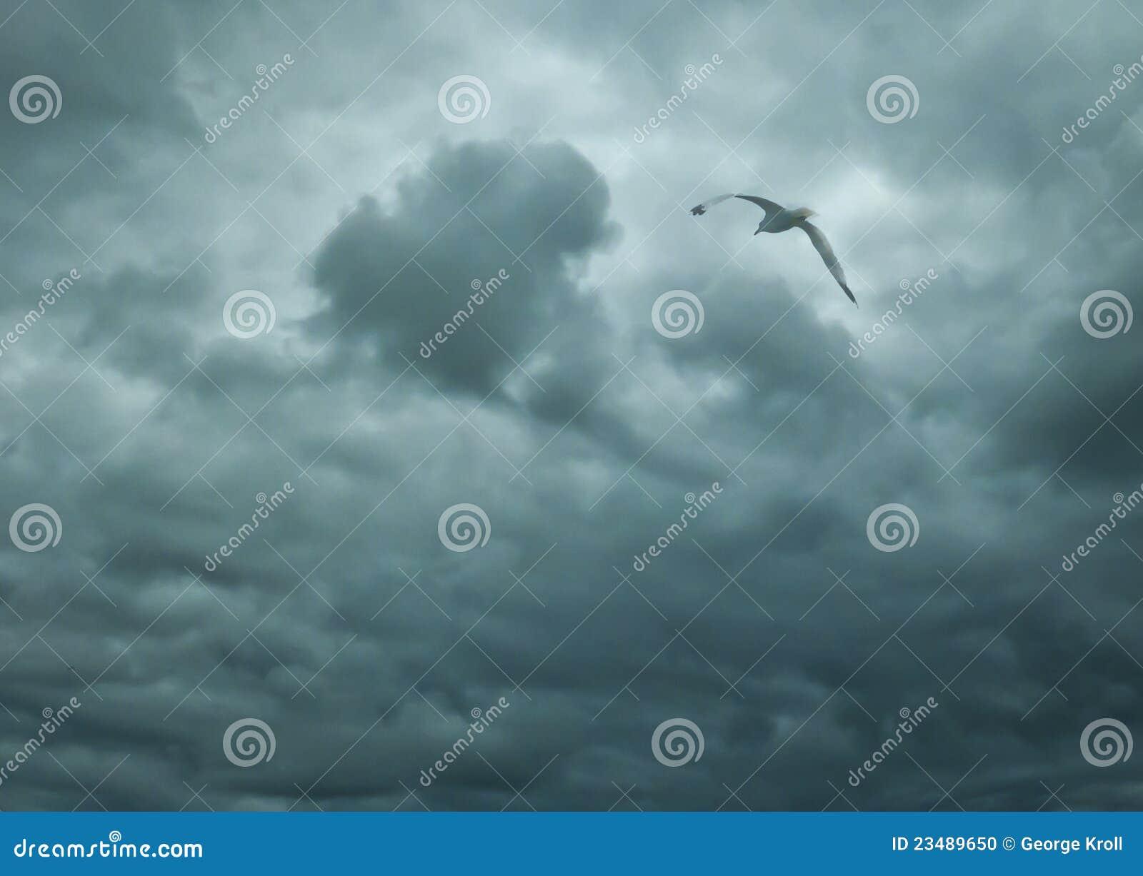 鸟蓝色飞行天空