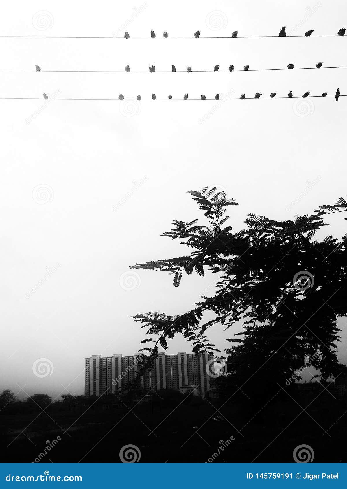 鸟这城市群