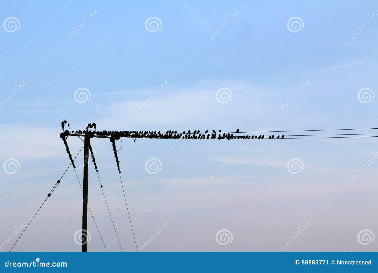 鸟,亚弗列・希治阁