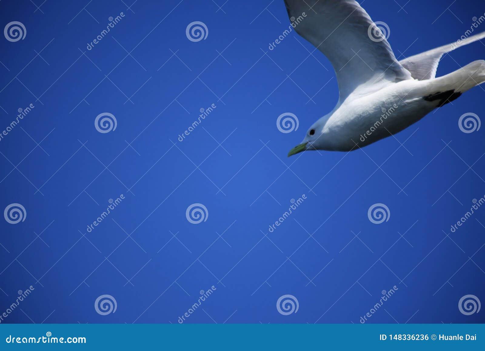 鸟,天空蔚蓝,
