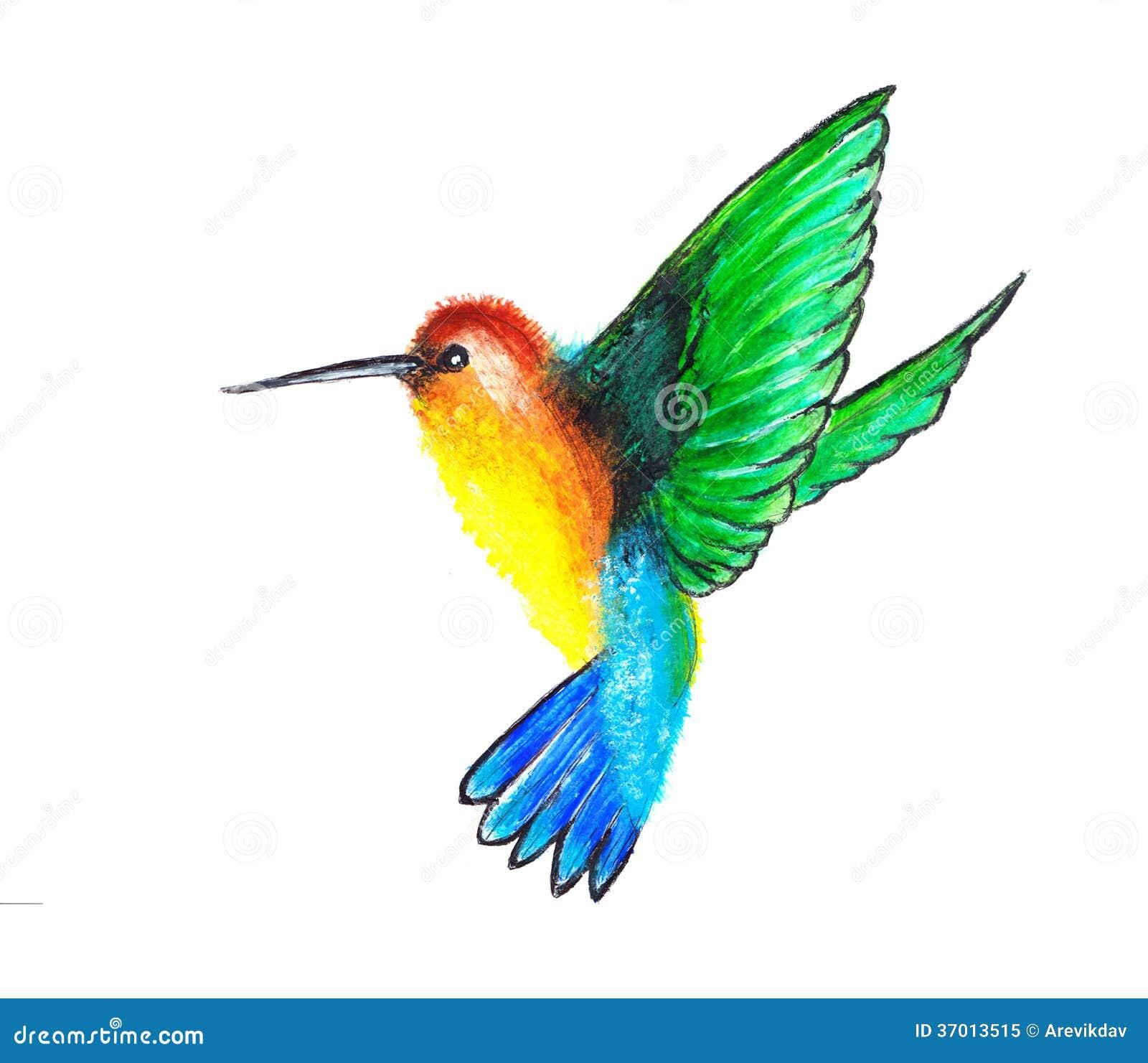 在白色背景的水彩蜂鸟.
