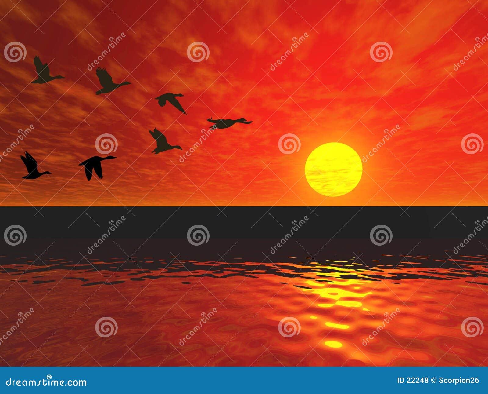 Download 鸭子飞行 库存例证. 插画 包括有 日落, 金黄, 剪影, 天空, 双翼飞机, 亮光, 敌意, 形成, 晒裂, 反映 - 22248