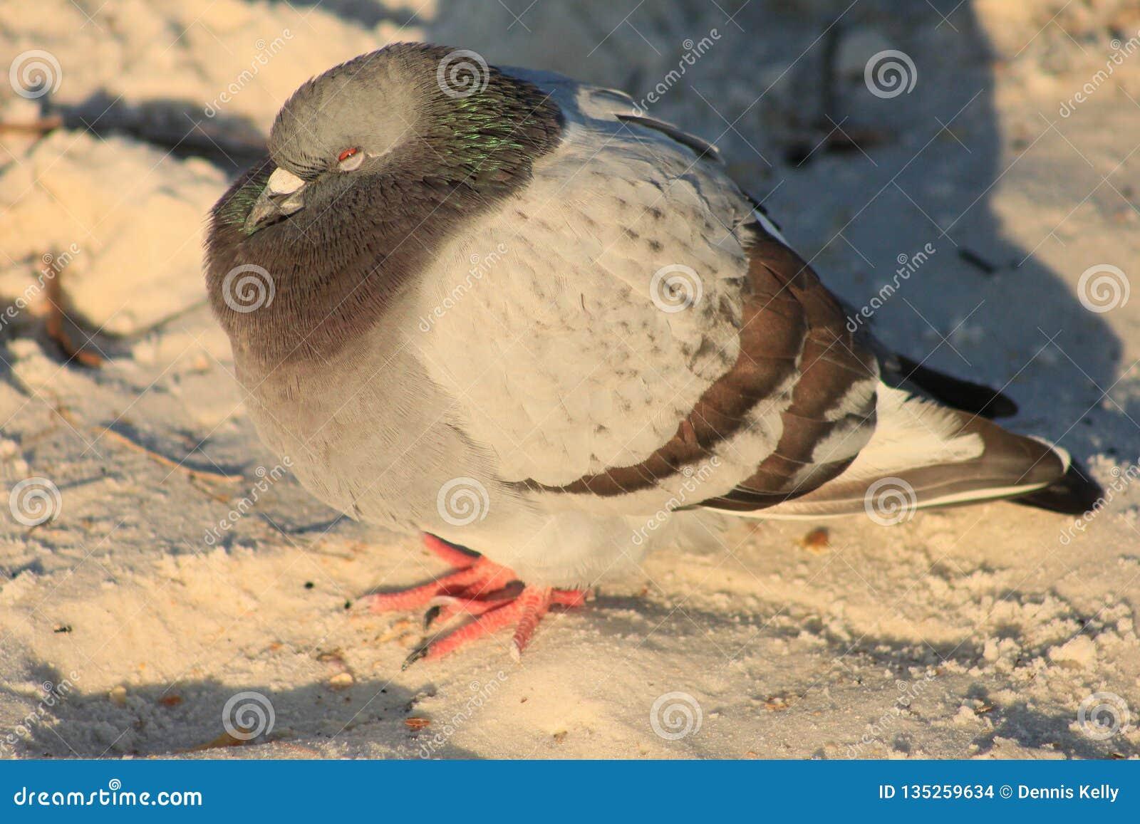 鸽子寒冷海滩挤作了一团反对风