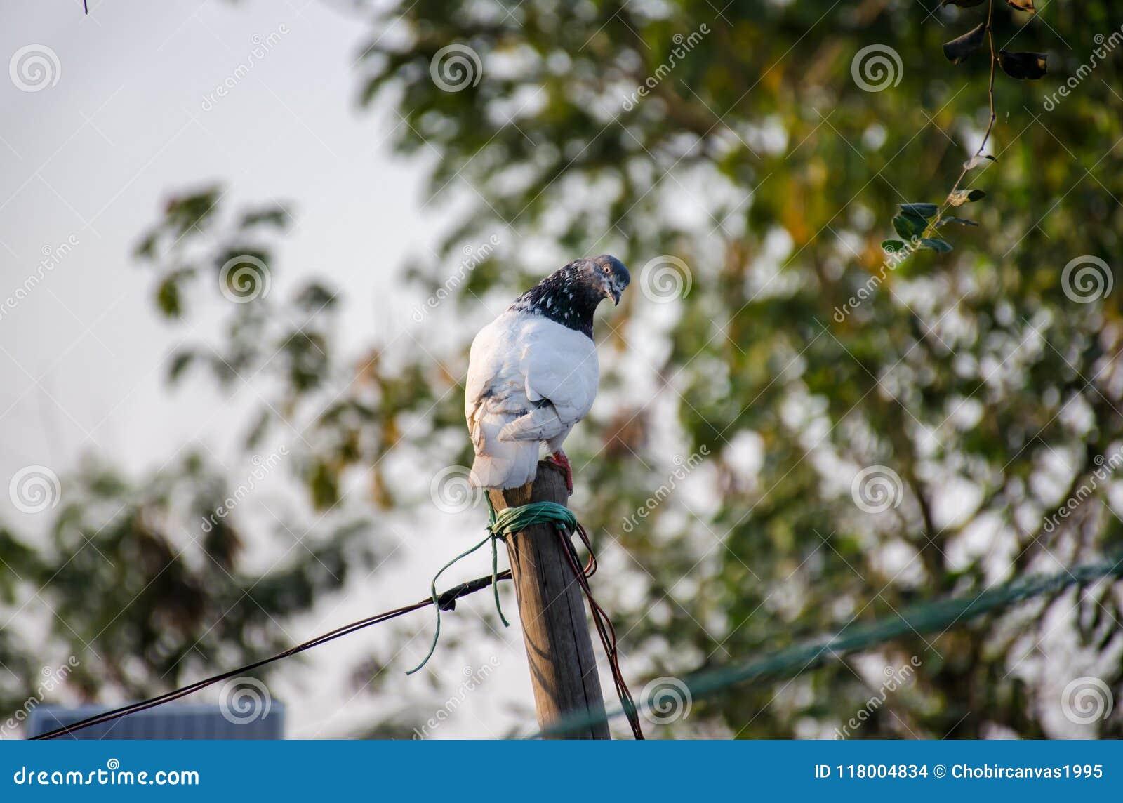 鸽子看看我