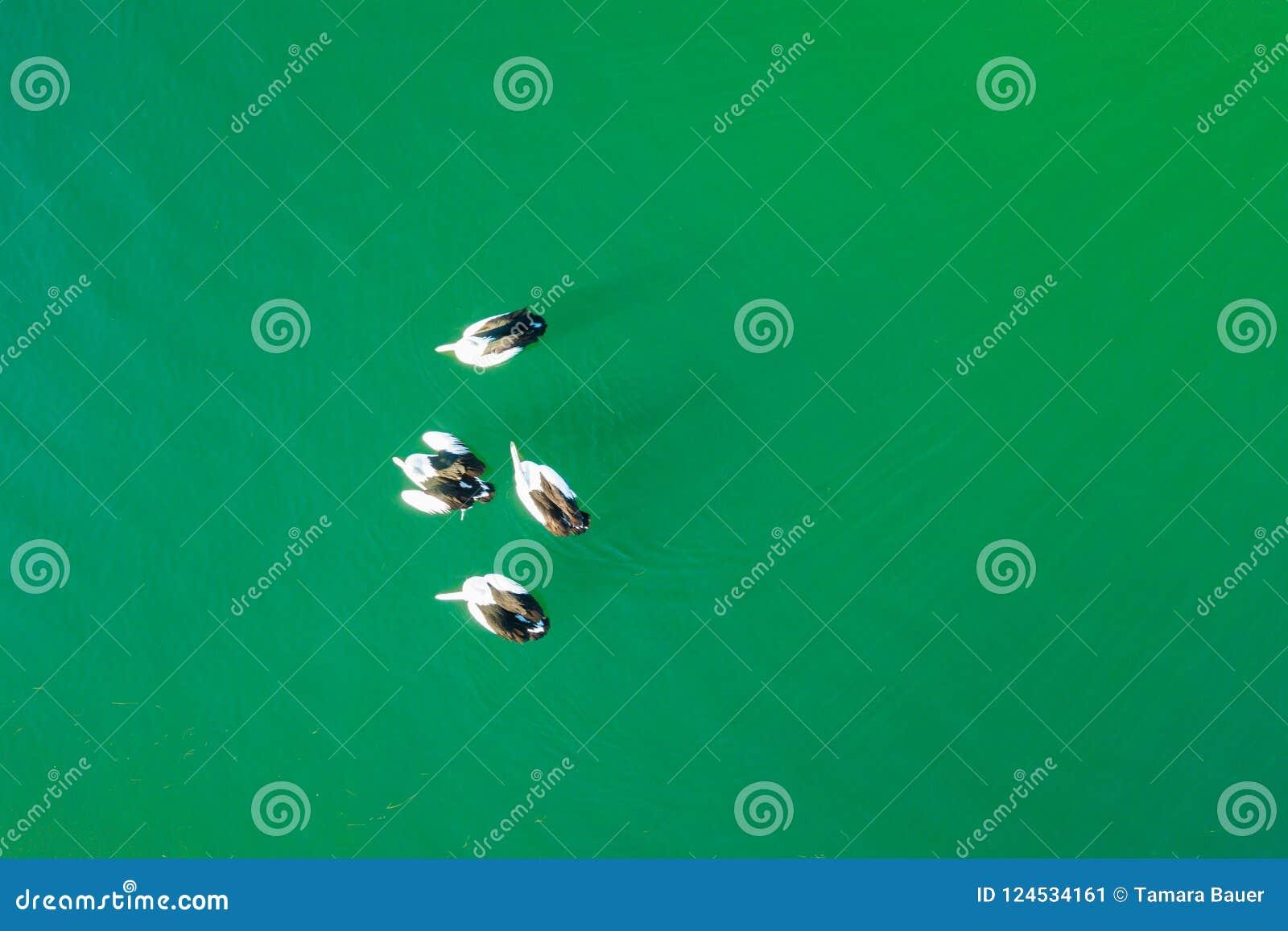 鹈鹕鸟瞰图,口岸阿尔伯特,南Gippsland