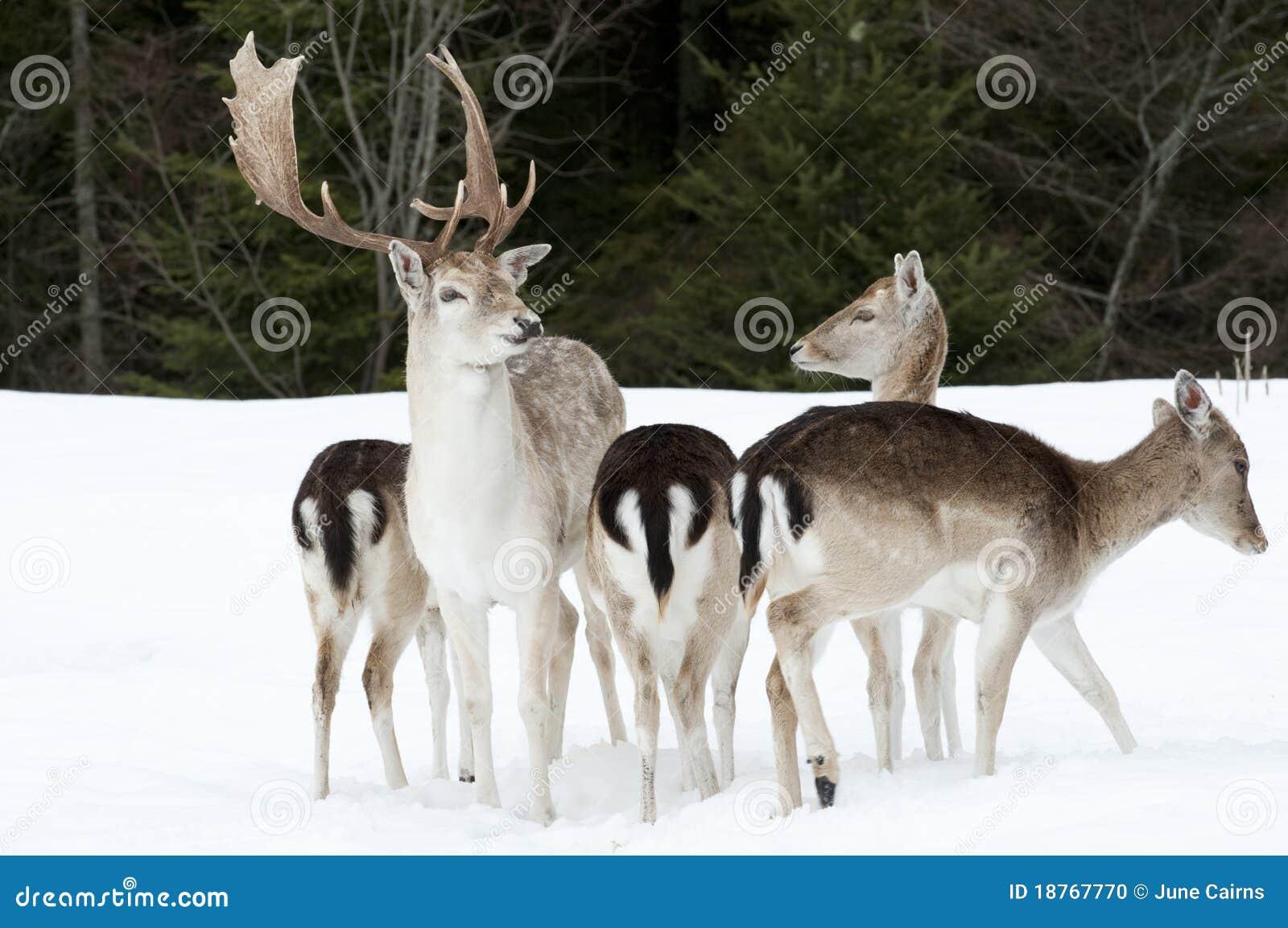 鹿休闲地系列