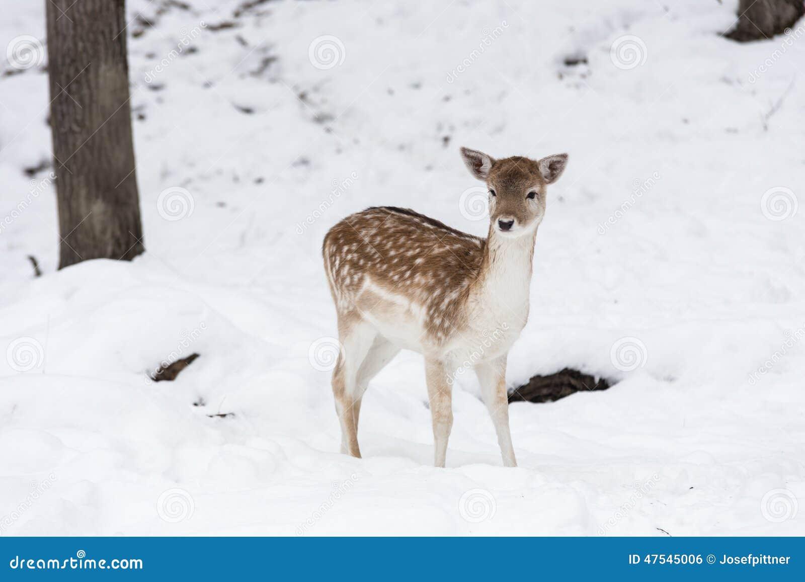 鹿休闲地雪