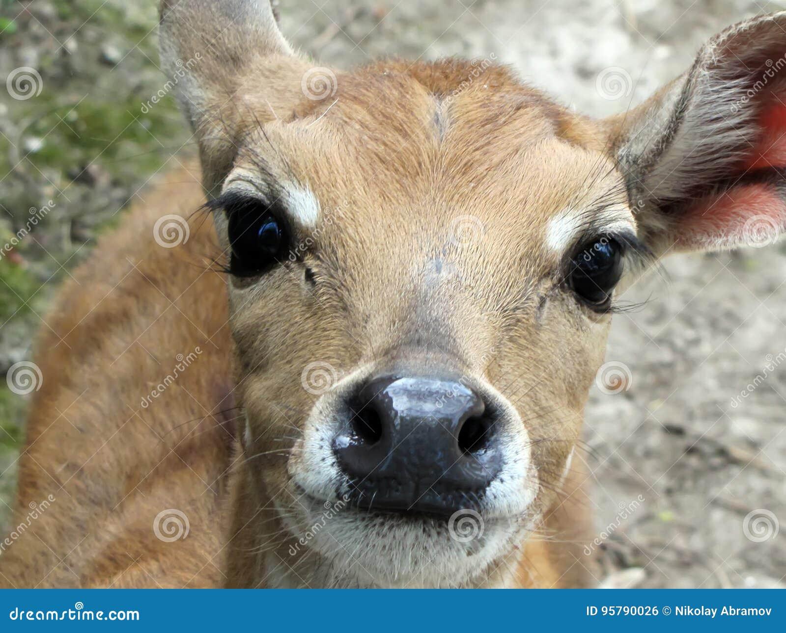 鹿在动物园里,看在房间