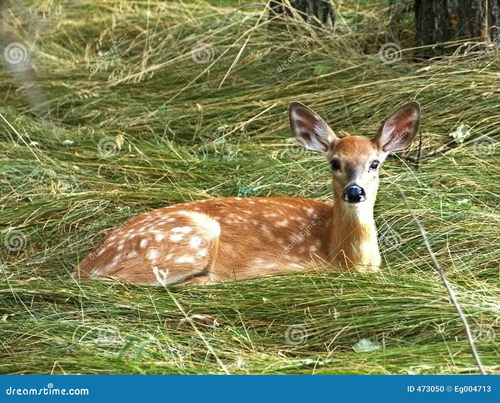 鹿注意的年轻人