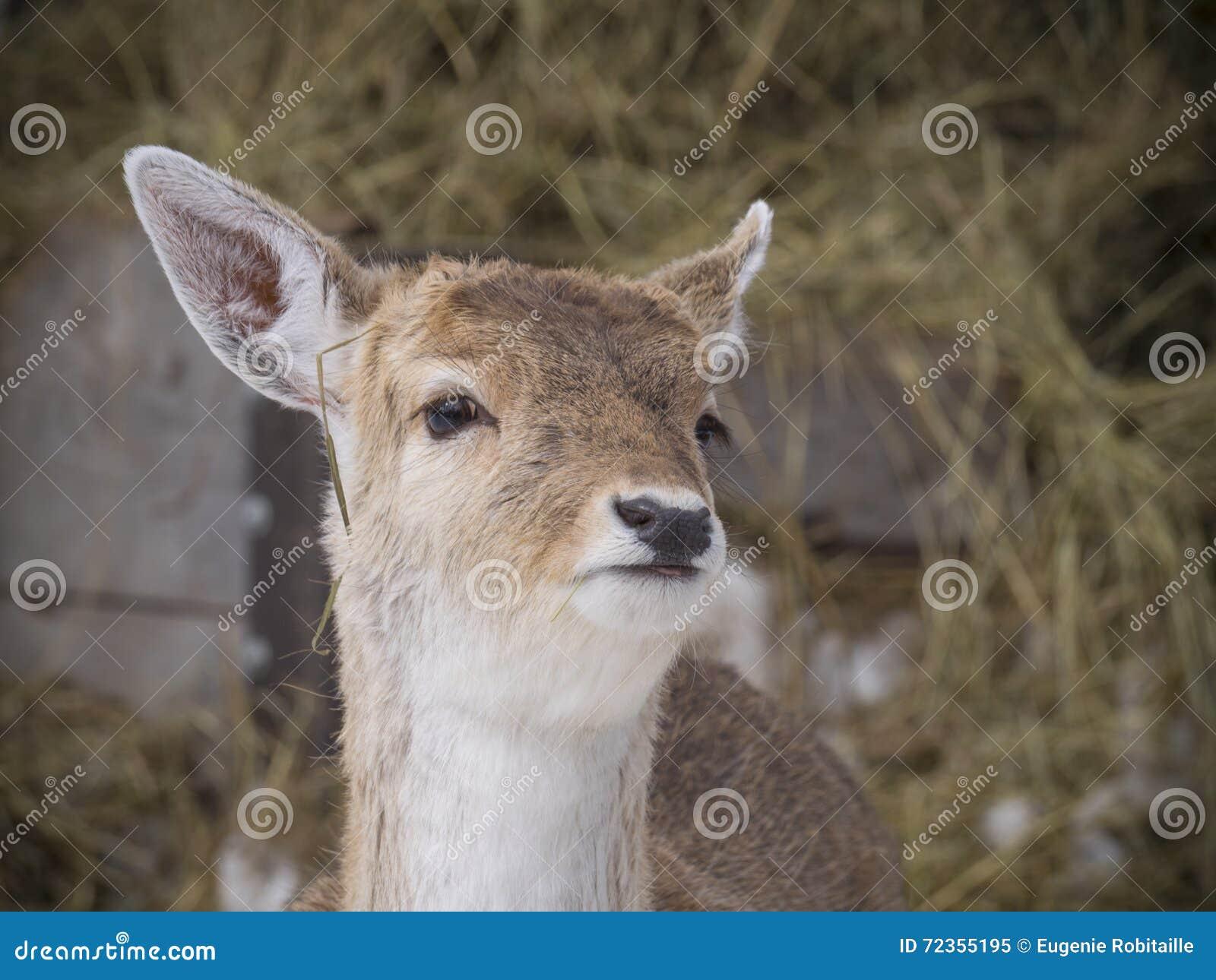 鹿蒙大拿尾标白色