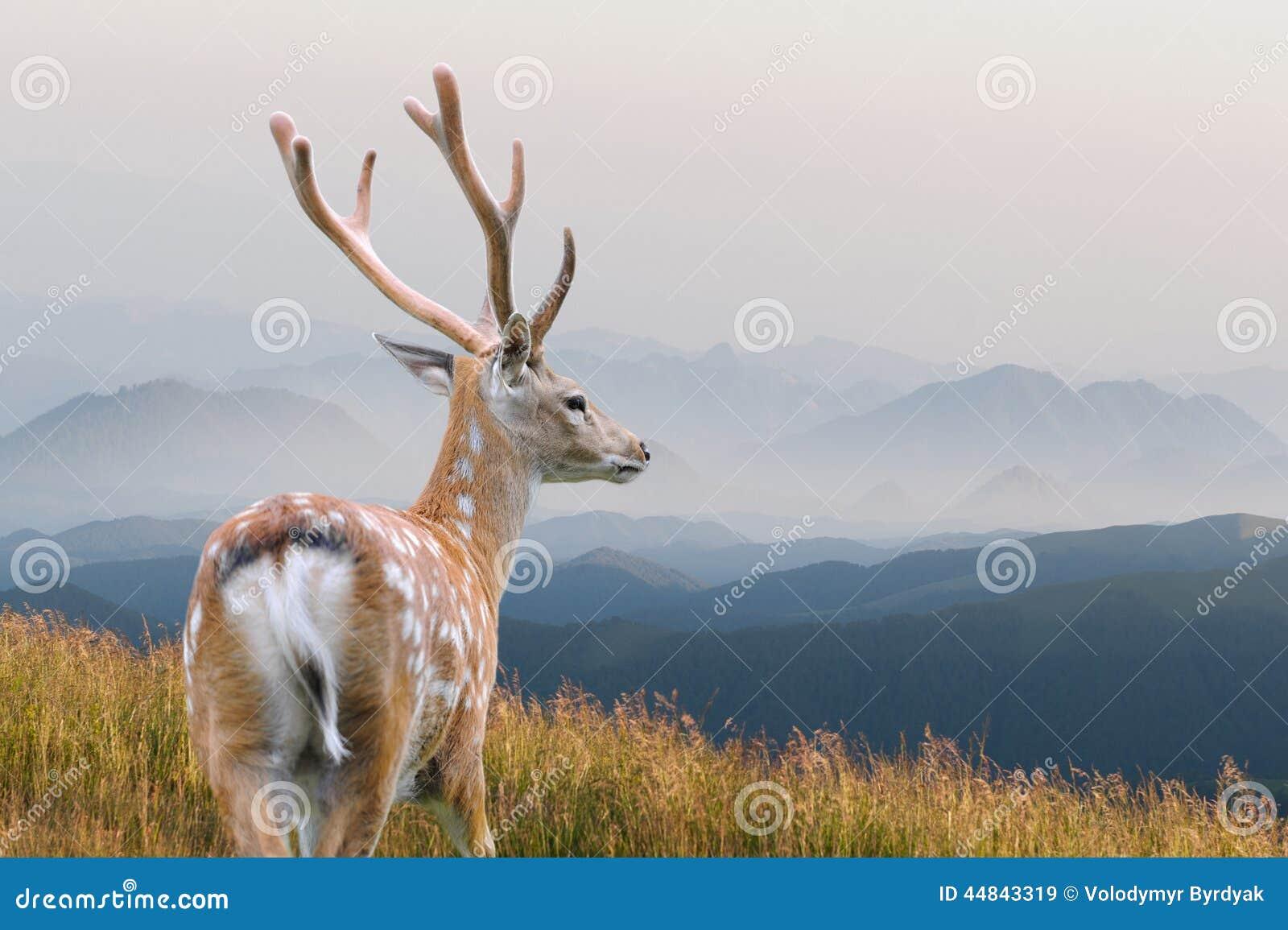 鹿讨好爱恋的妈妈注意白尾鹿
