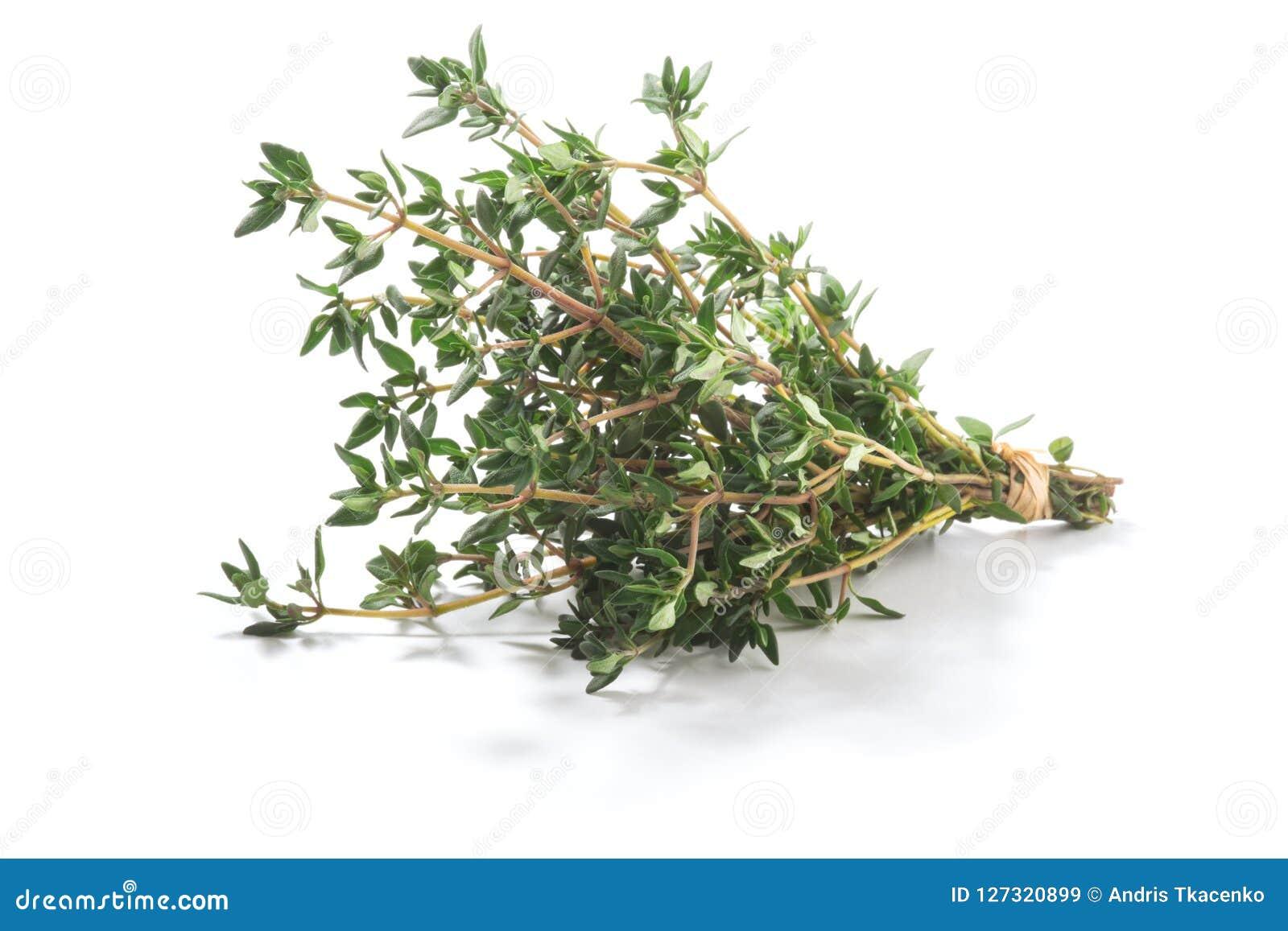 麝香草新鲜的草本胸腺寻常的灌木