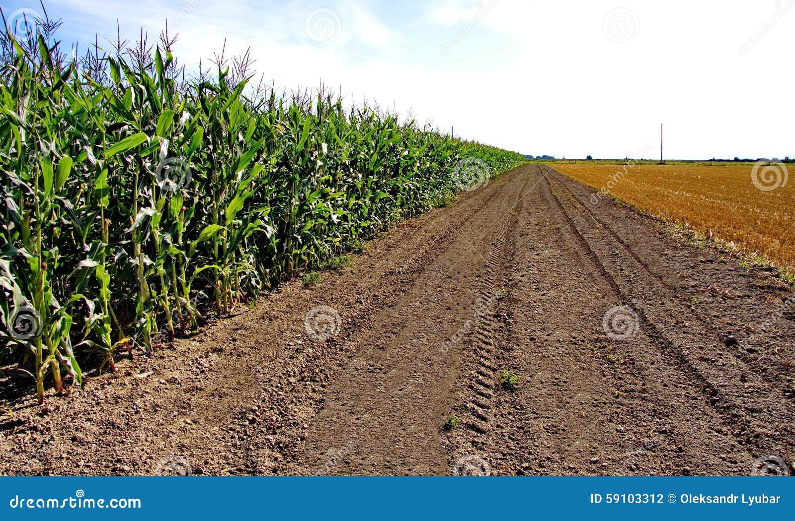 麦地和被剪的草的领域
