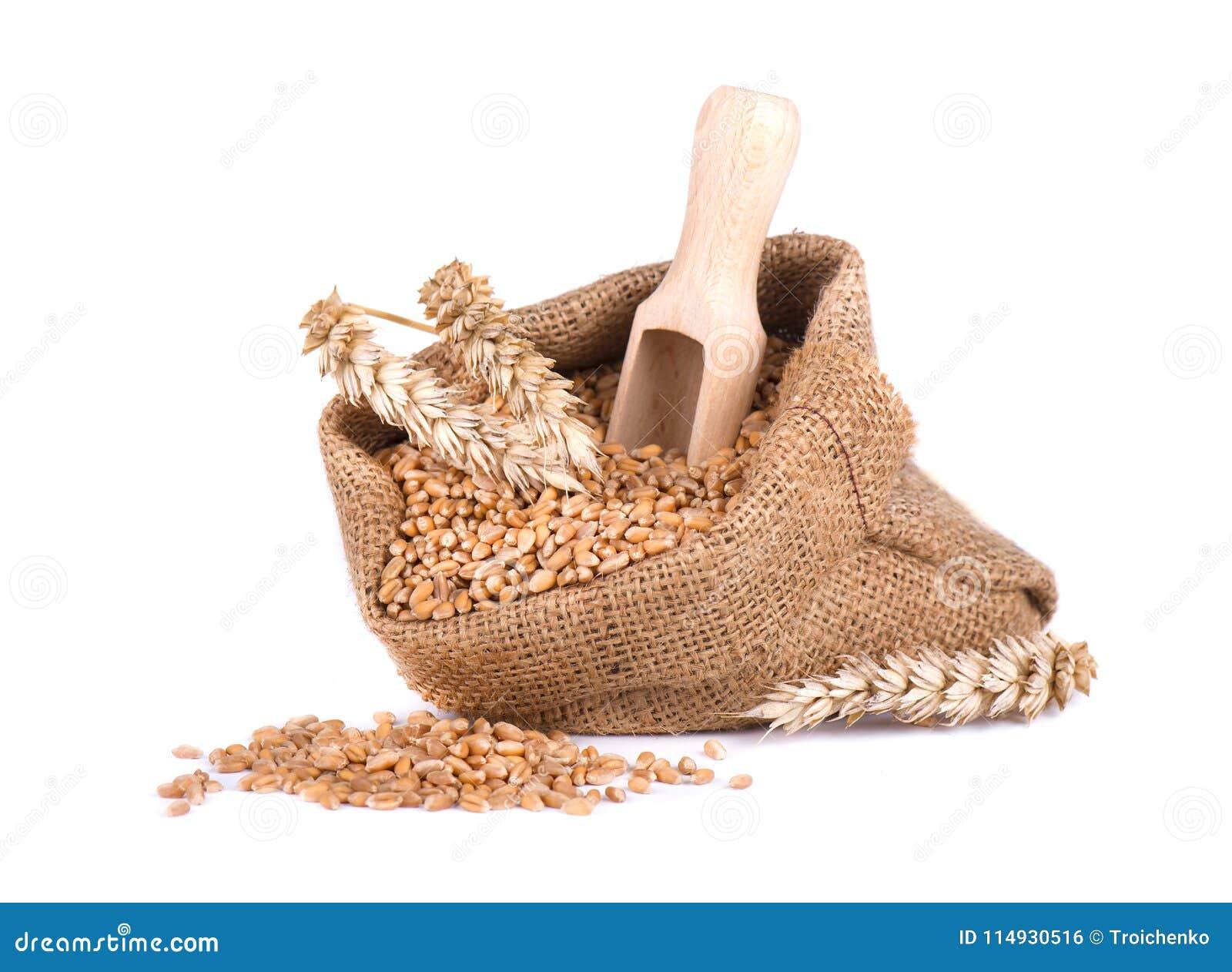麦子钉和麦子五谷在白色背景隔绝的粗麻布袋