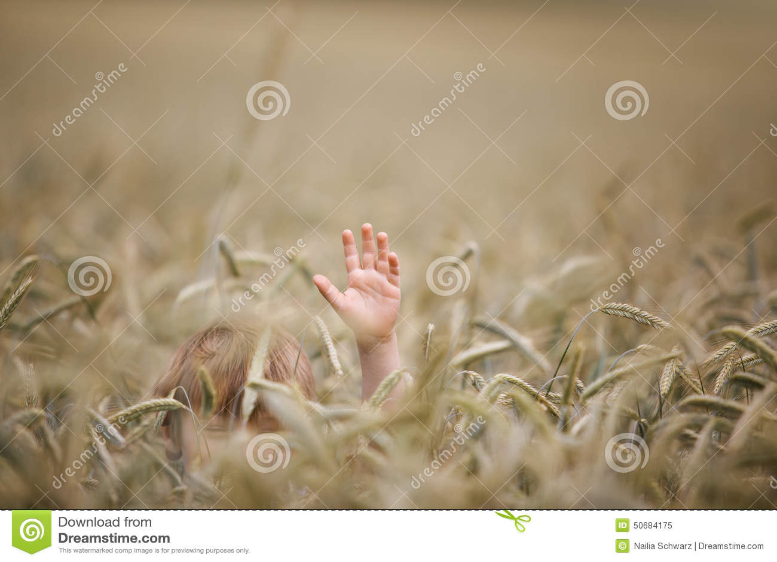 Download 麦田的男孩 库存图片. 图片 包括有 现有量, 挥动, 夏天, 金黄, 成熟, browne, ,并且, 男朋友 - 50684175