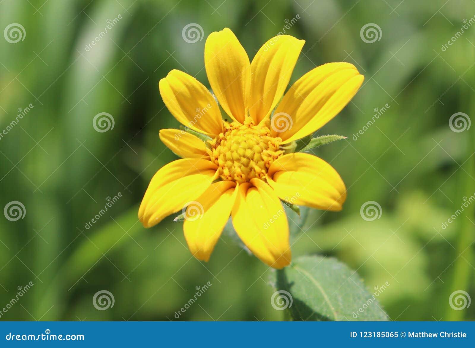 黄色,花,外部,模糊的背景