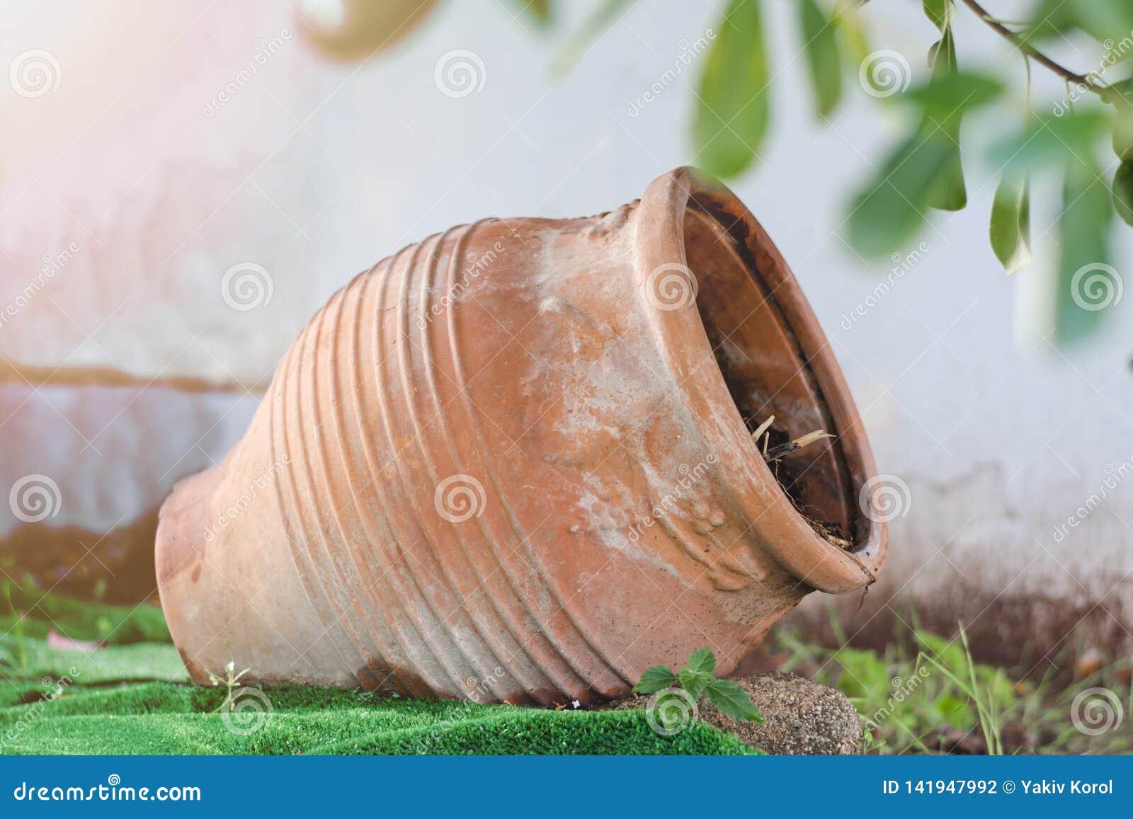 黏土花瓶,罐,增长的花的,在它的边的树谎言颠倒在街道上 雅典,希腊