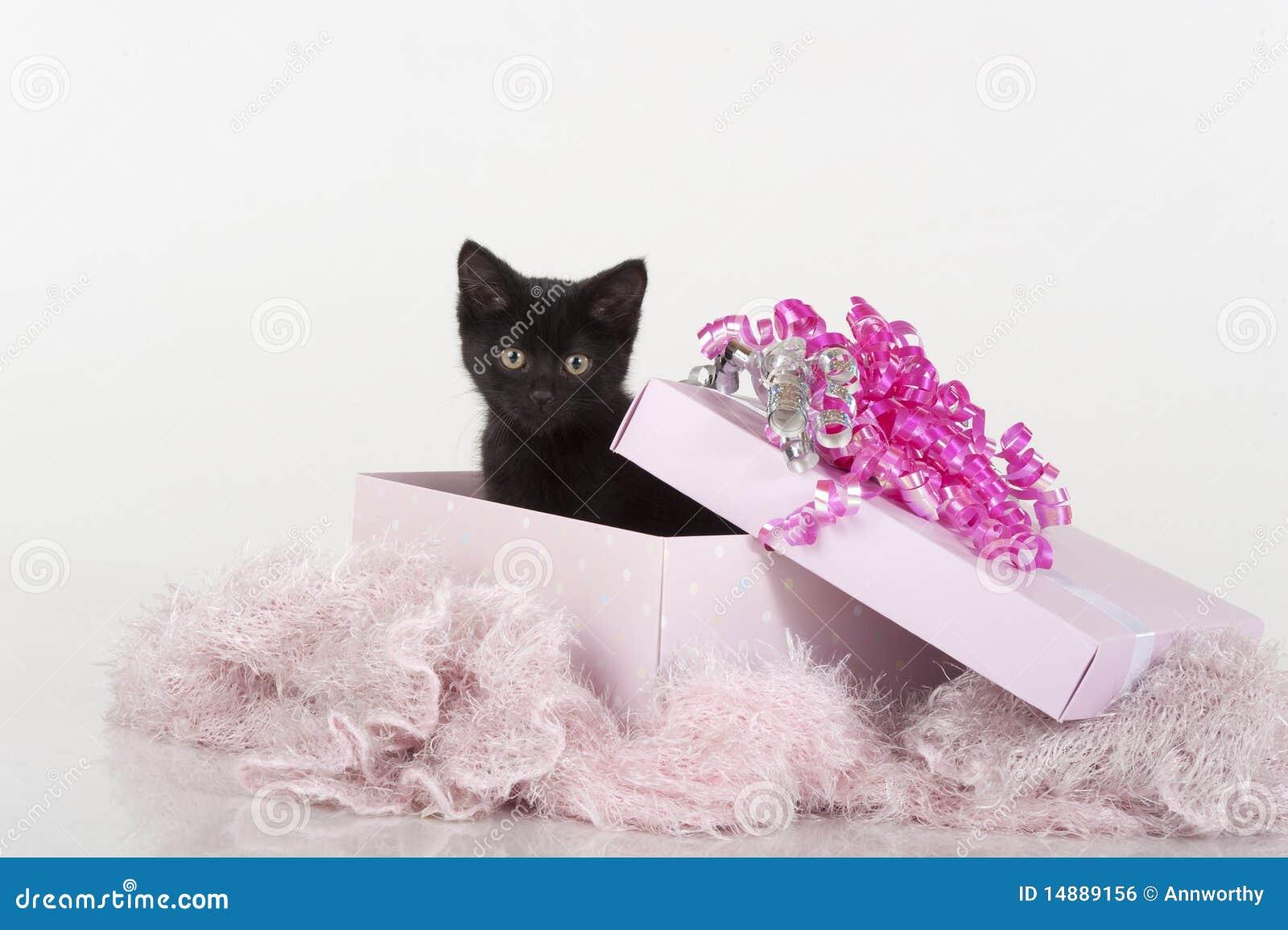 黑匣子逗人喜爱的礼品小猫粉红色存&#