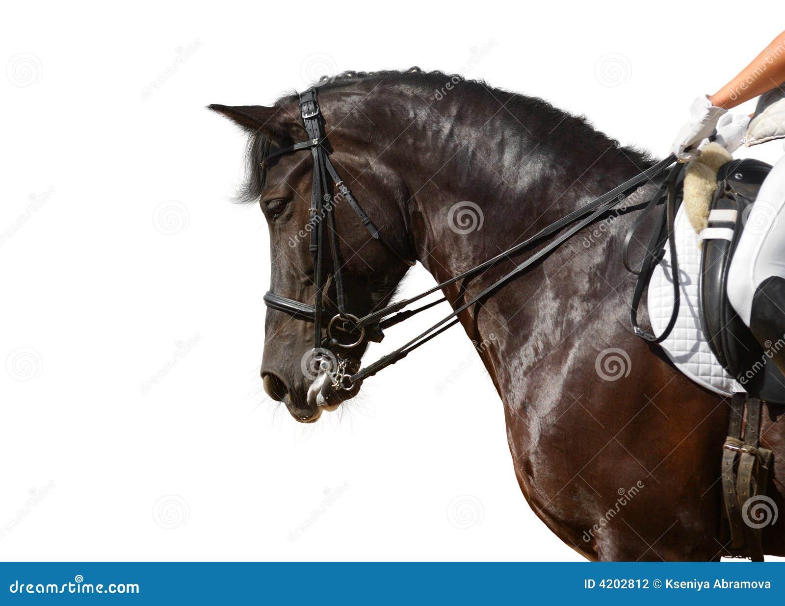 黑色驯马马