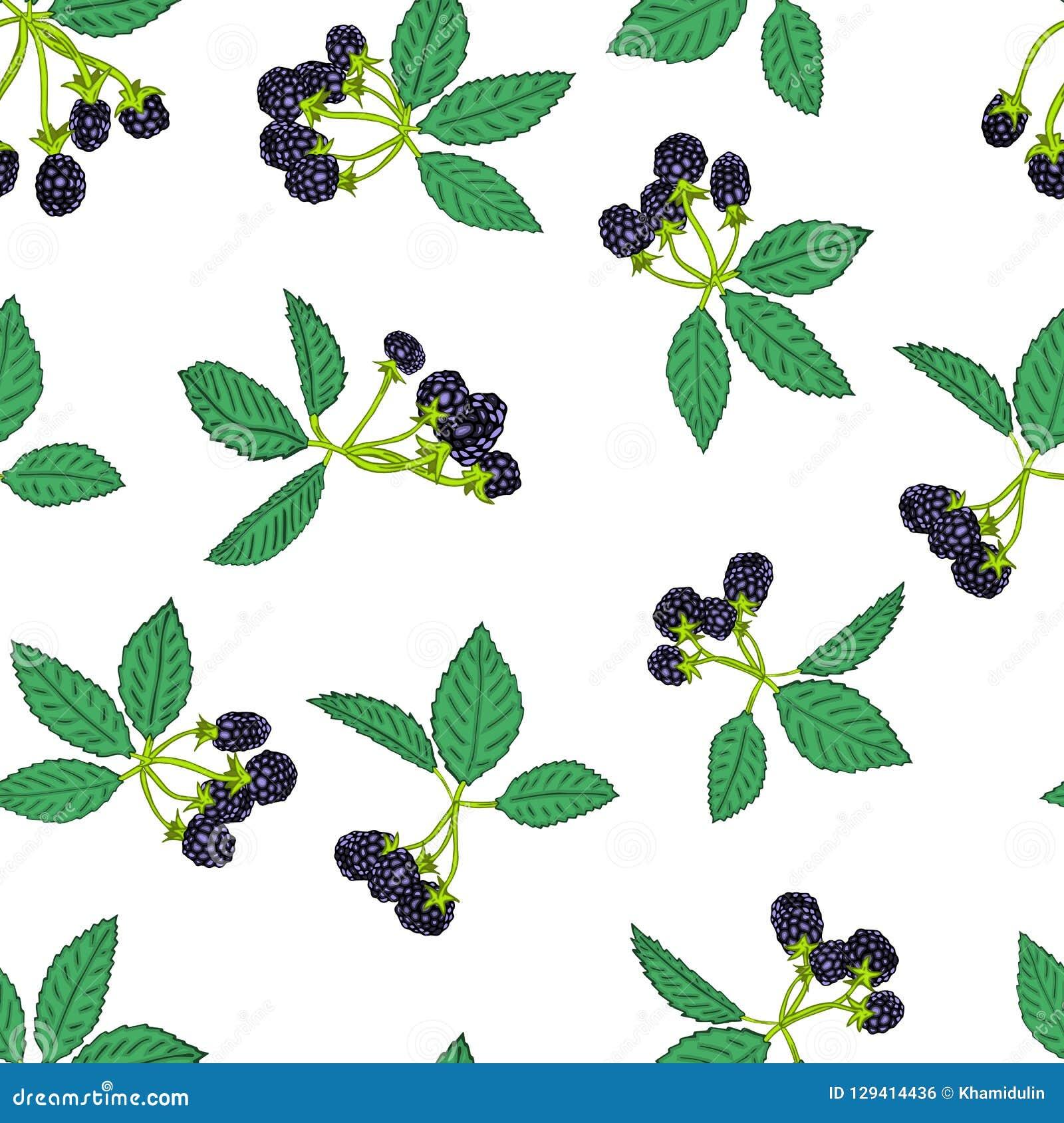 黑莓或莓的无缝的样式 纺织品的莓果背景,墙纸,套图画,盖子,表面