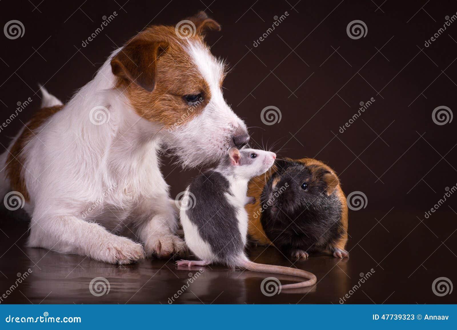跟狗拍av的_鼠和试验品和狗