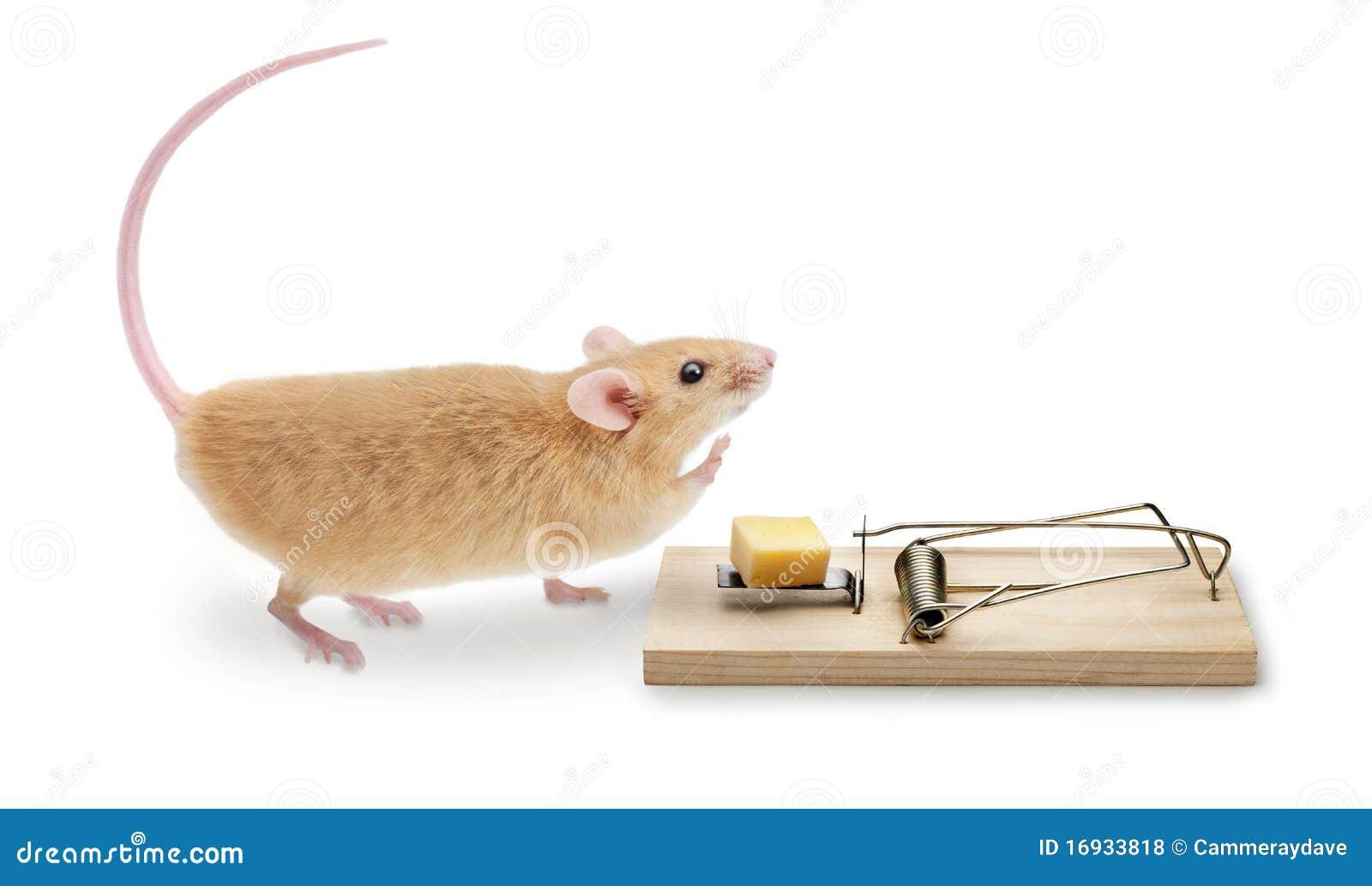 鼠标捕鼠器