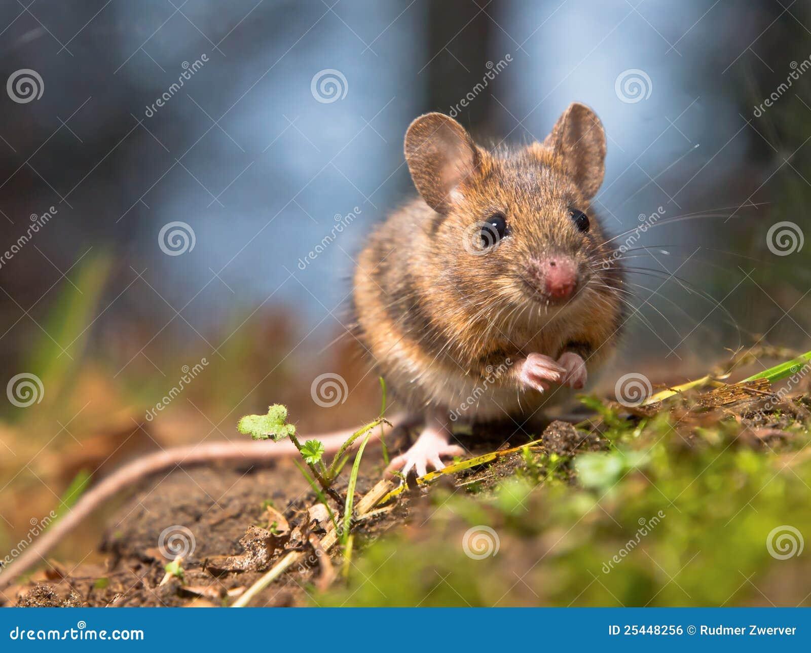 鼠标通配木头