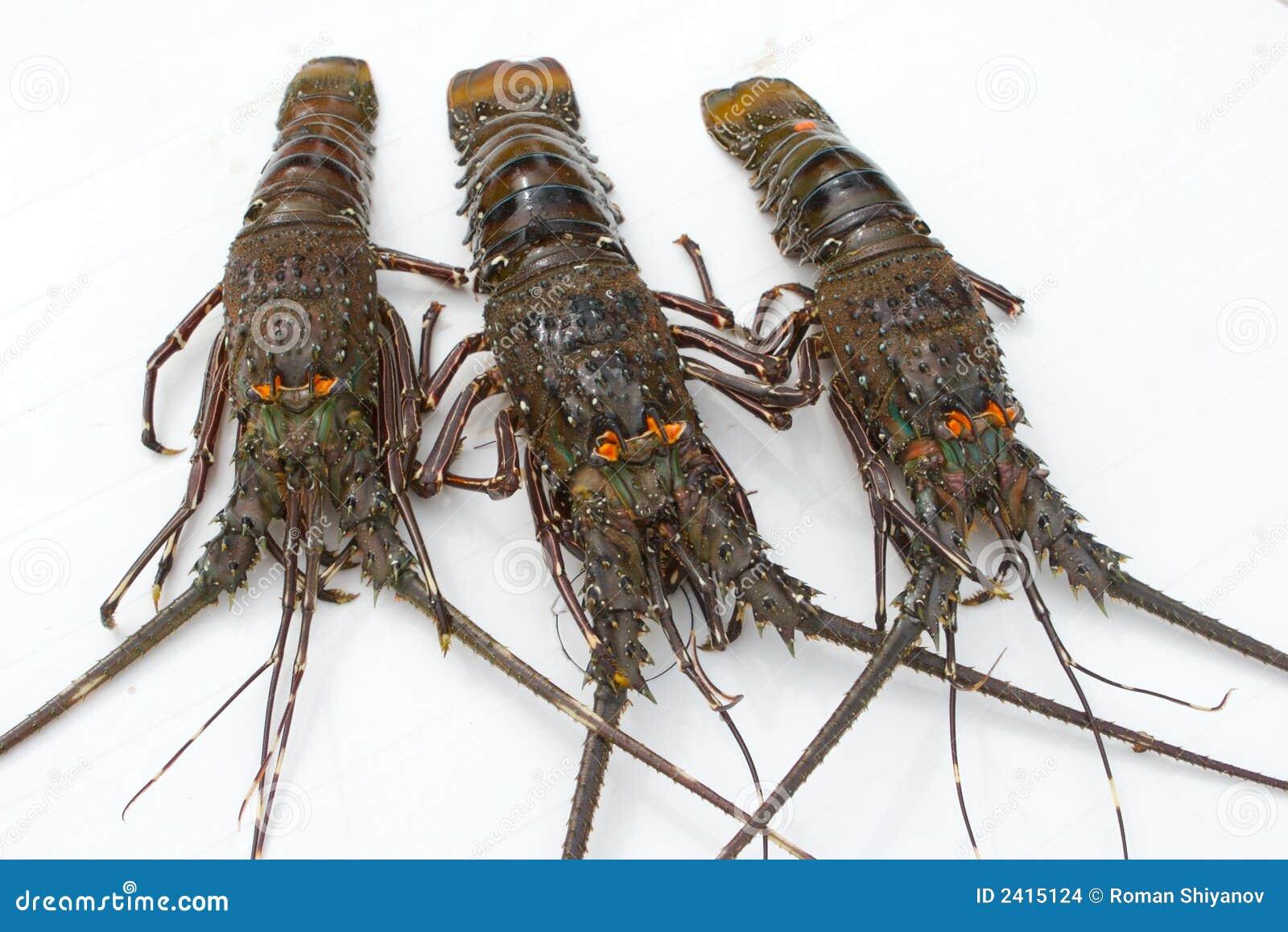 龙虾结构树