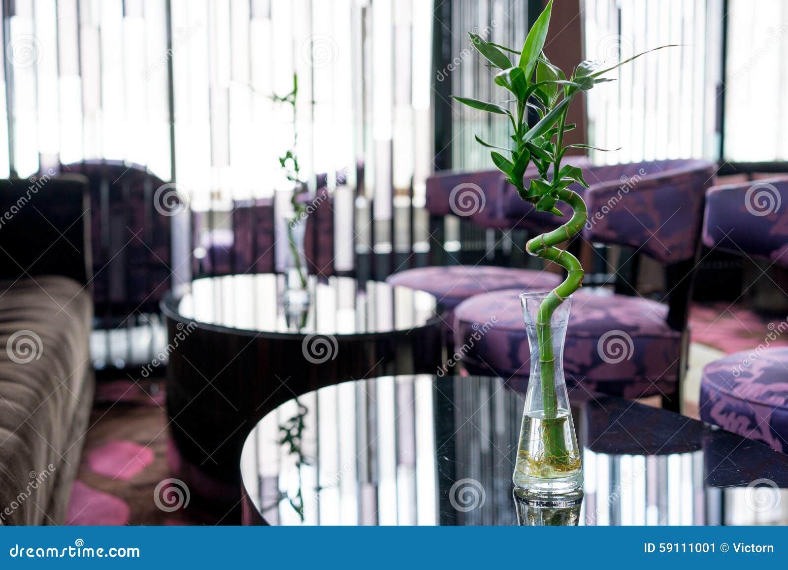 龙血树属植物Sanderiana