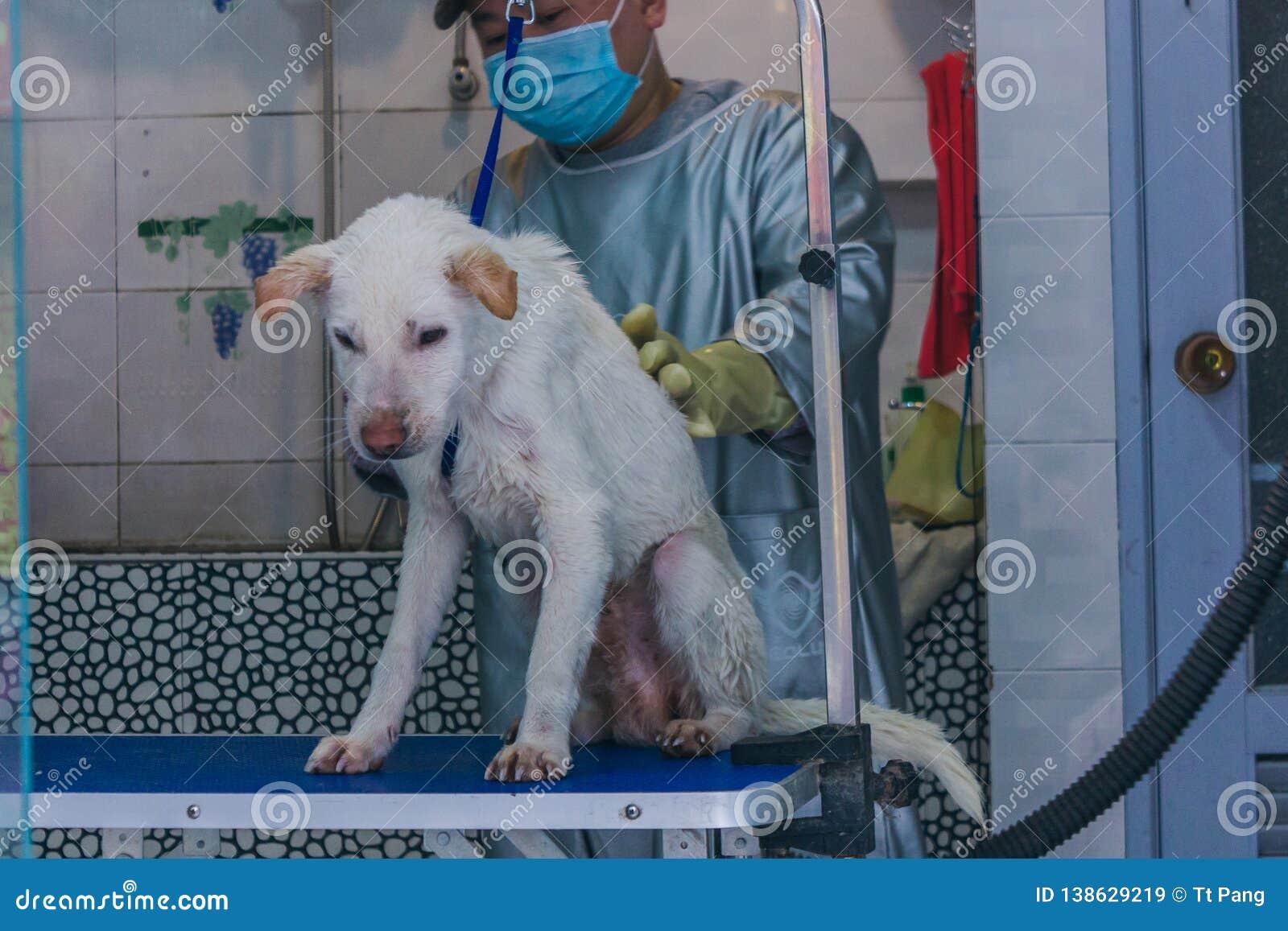 24,中国12月2015年,Chongqi 洗一条哀伤的白色离群街道狗的狩医帮助澡