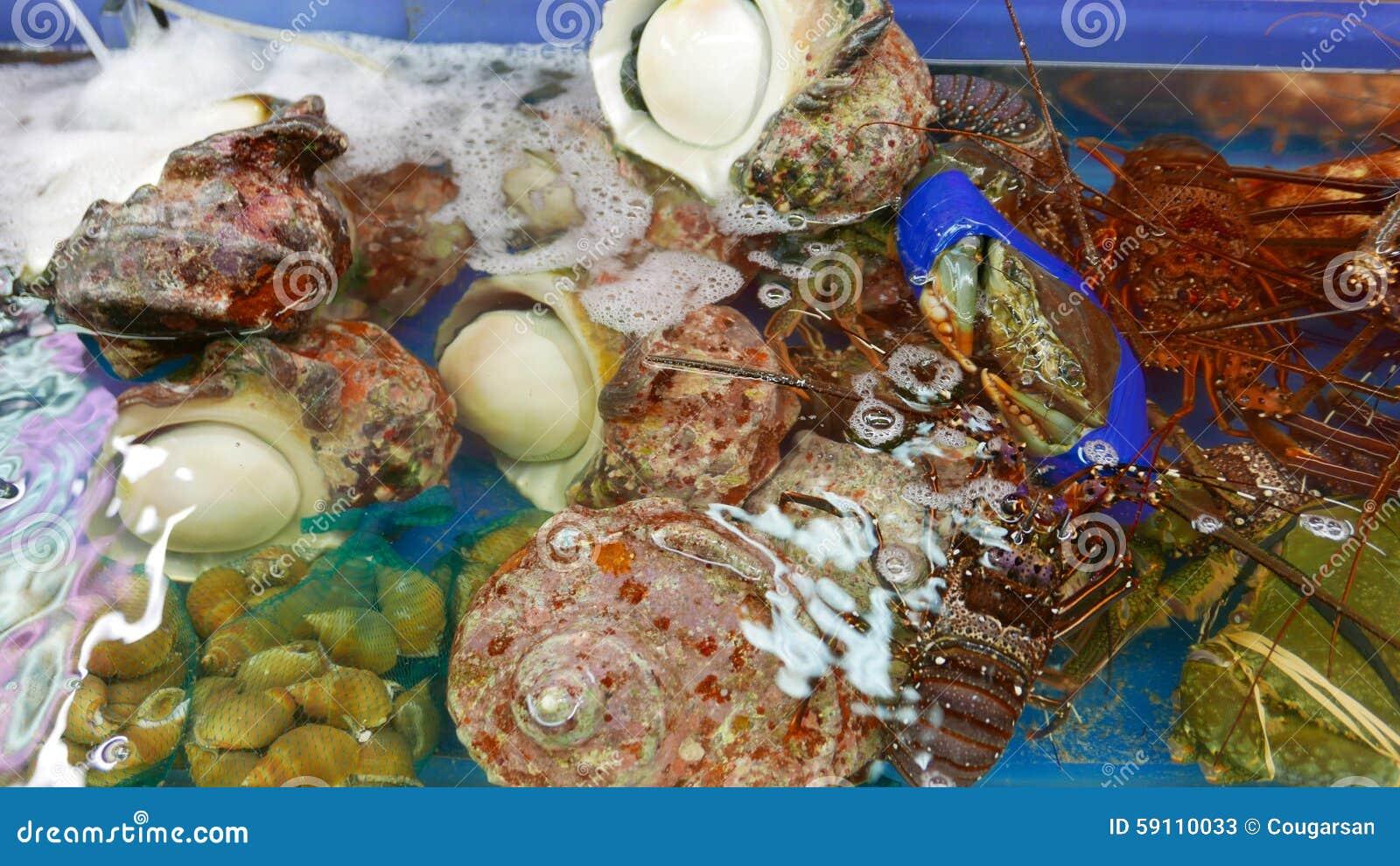 贝类,龙虾,壳