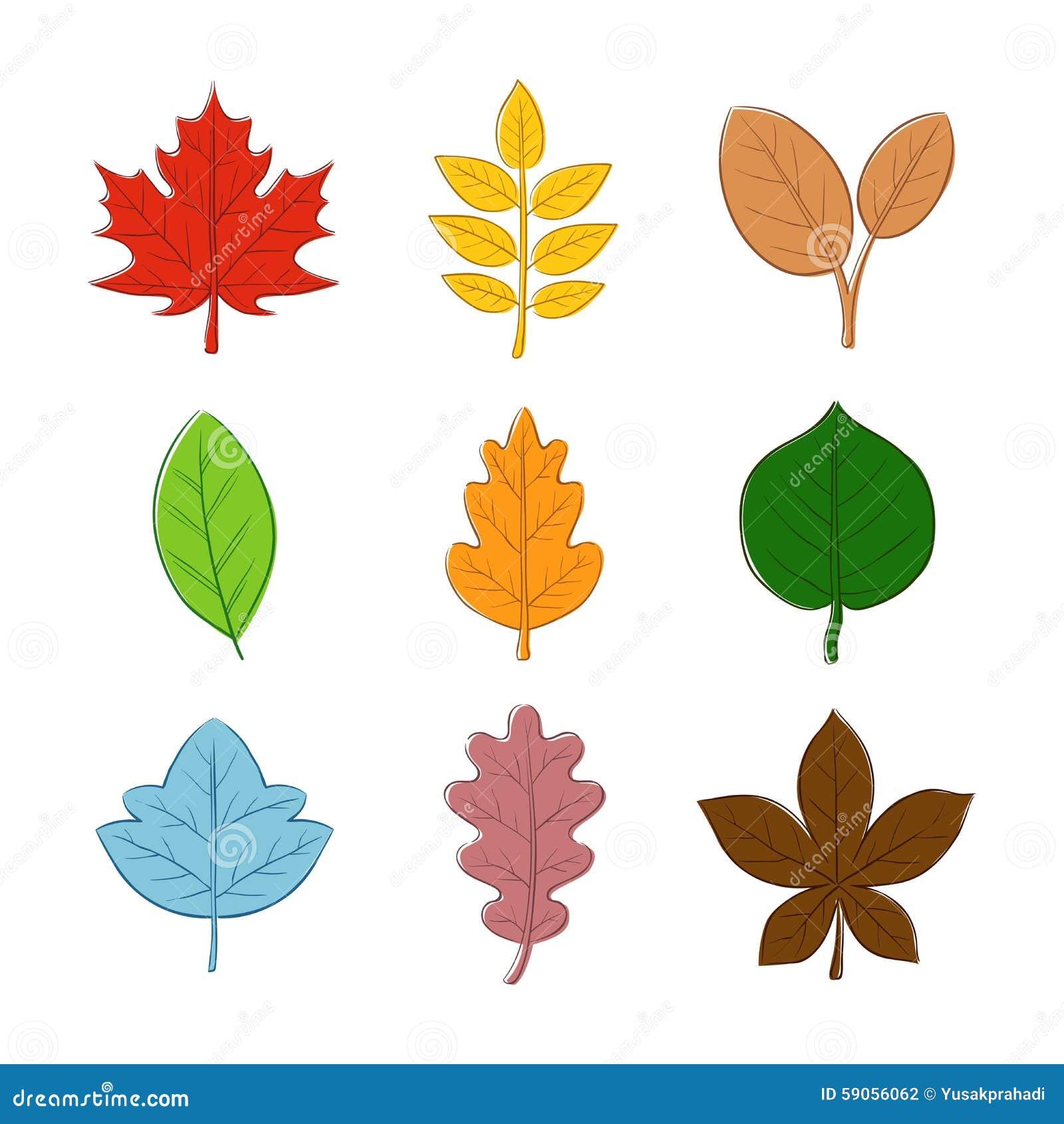 为什么叶子的形状是各种各样的?图片