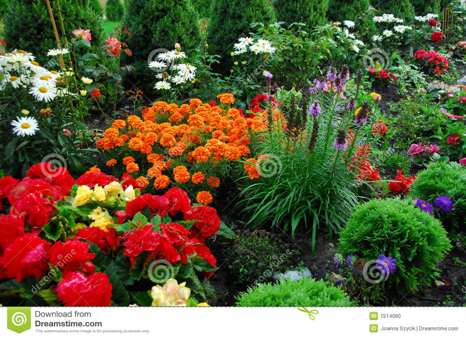 Λουλούδια καλλιεργούν τα δέντρα μου