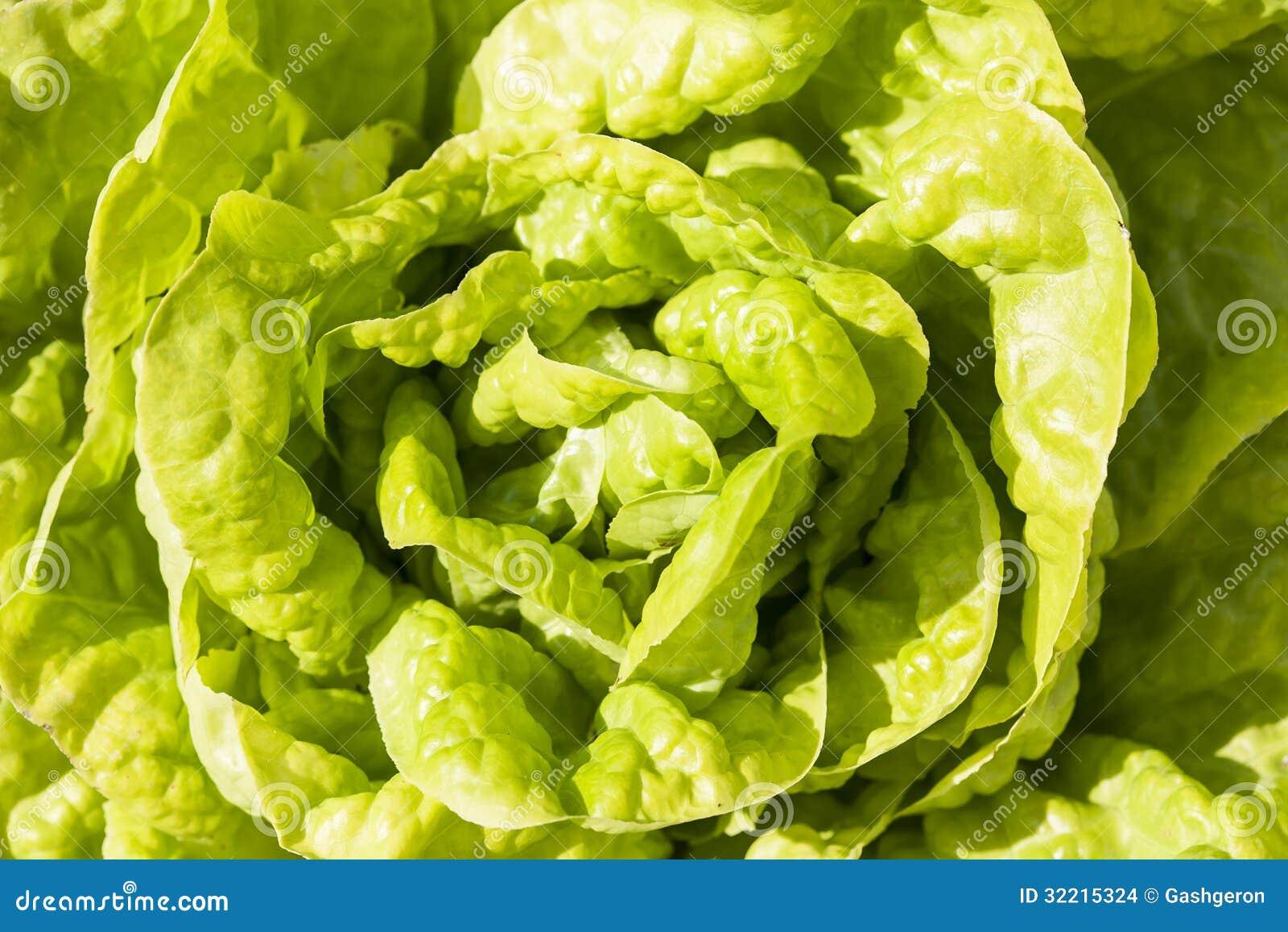 Green Leaf Nude Teens 53