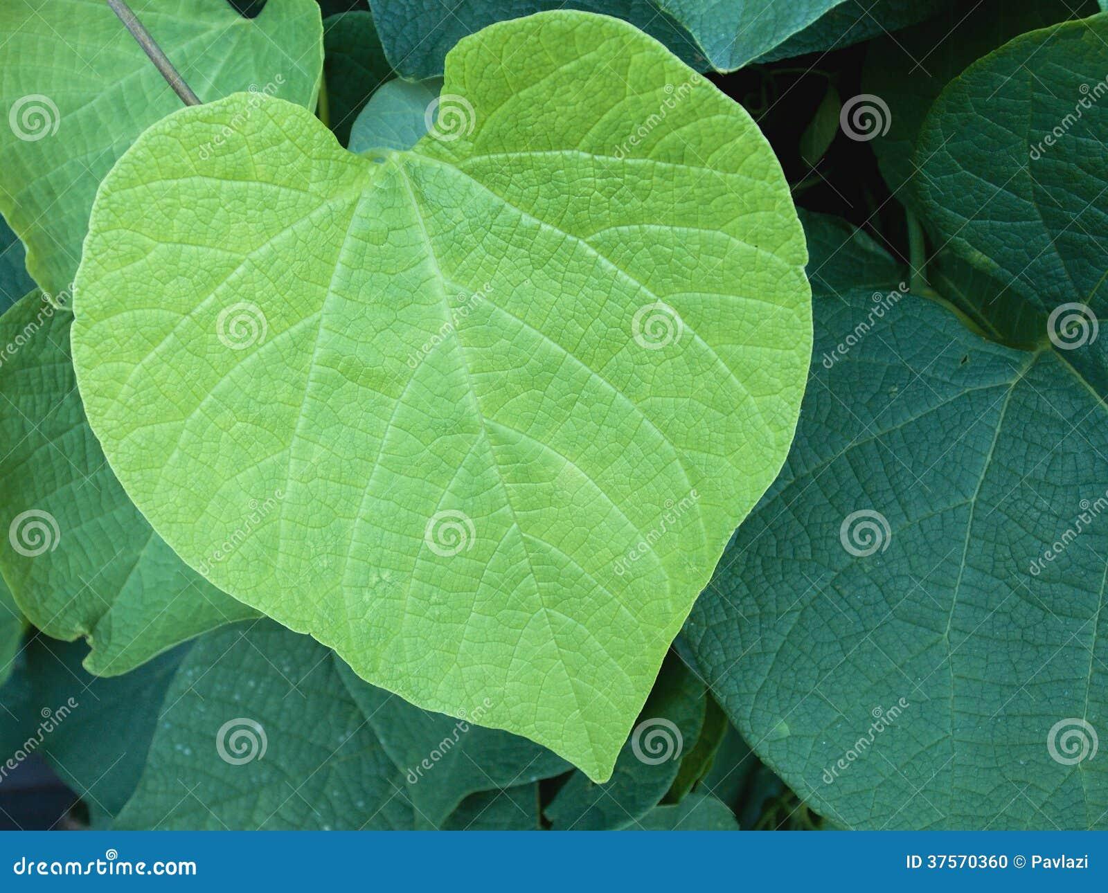 Green Leaf Teen Porn 6