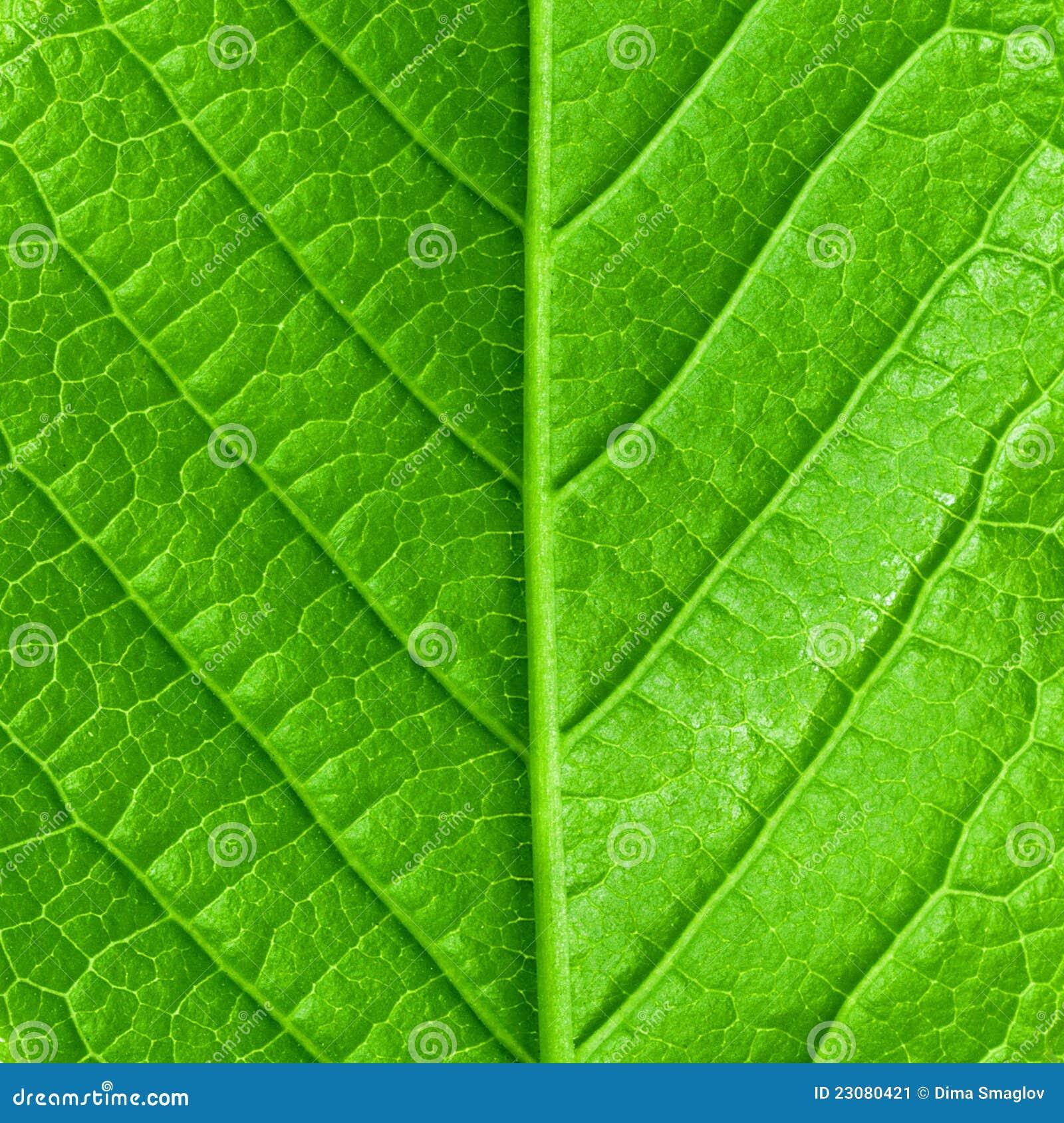 Green Leaf Teen Porn 61