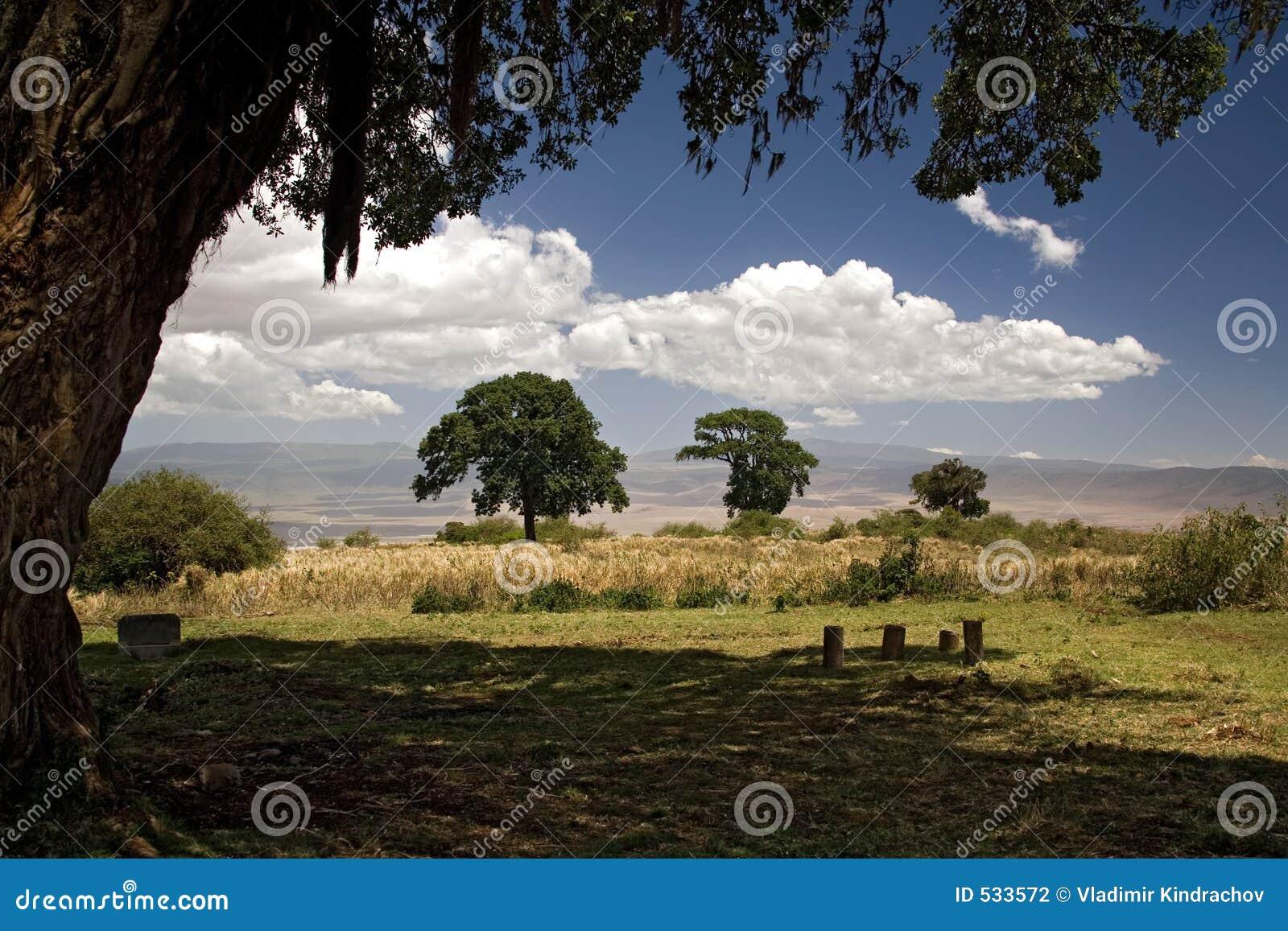 Download 016非洲横向ngorongoro 库存照片. 图片 包括有 云彩, 本质, 小山, 蓝色, 测试, 结构树 - 533572