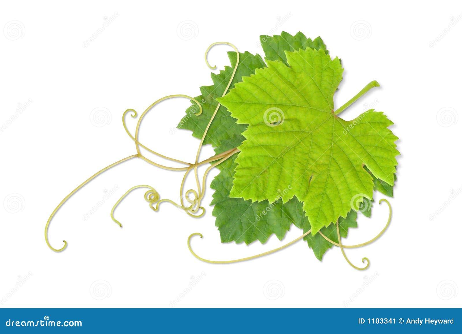 02 листь виноградины