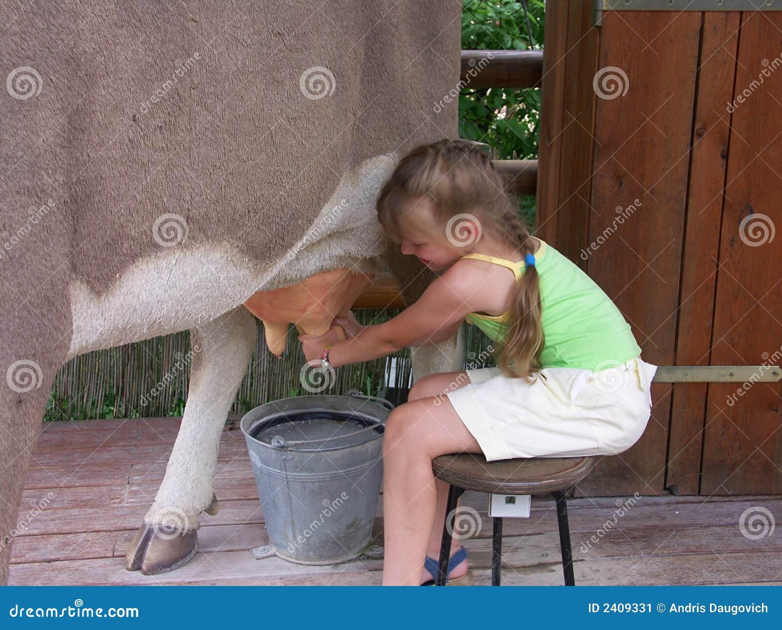 02 krów dziewczyna