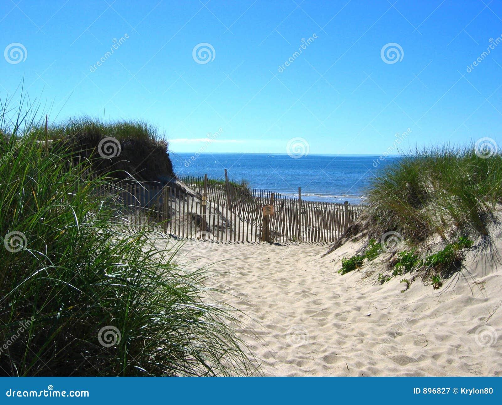 03 cape cod na plaży