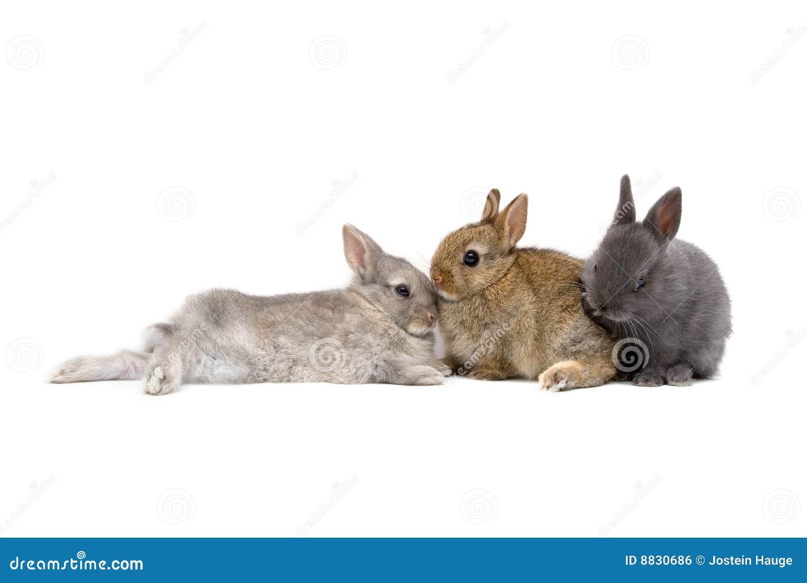 03 lapins
