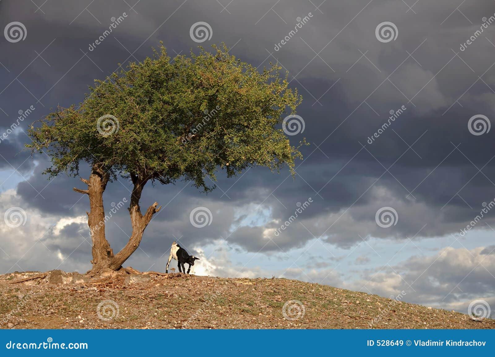 Download 030非洲横向serengeti 库存图片. 图片 包括有 原野, 测试, 工厂, 肯尼亚, 天空, 结构树 - 528649